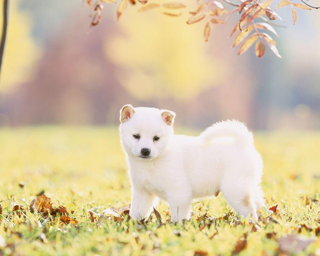 baby and shiba inu wallpaper - photo #26