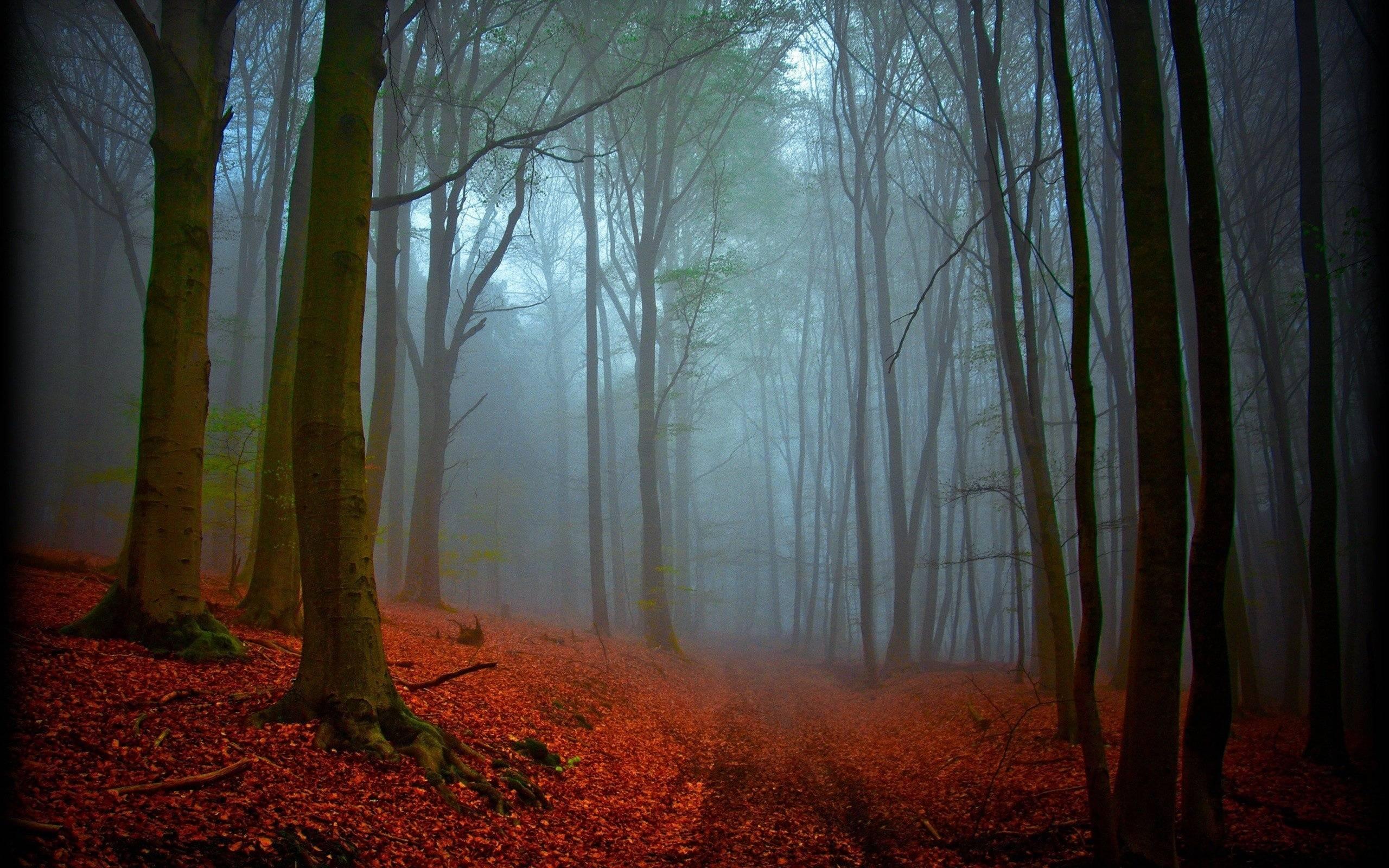 dark forest widescreen wallpaper - photo #46