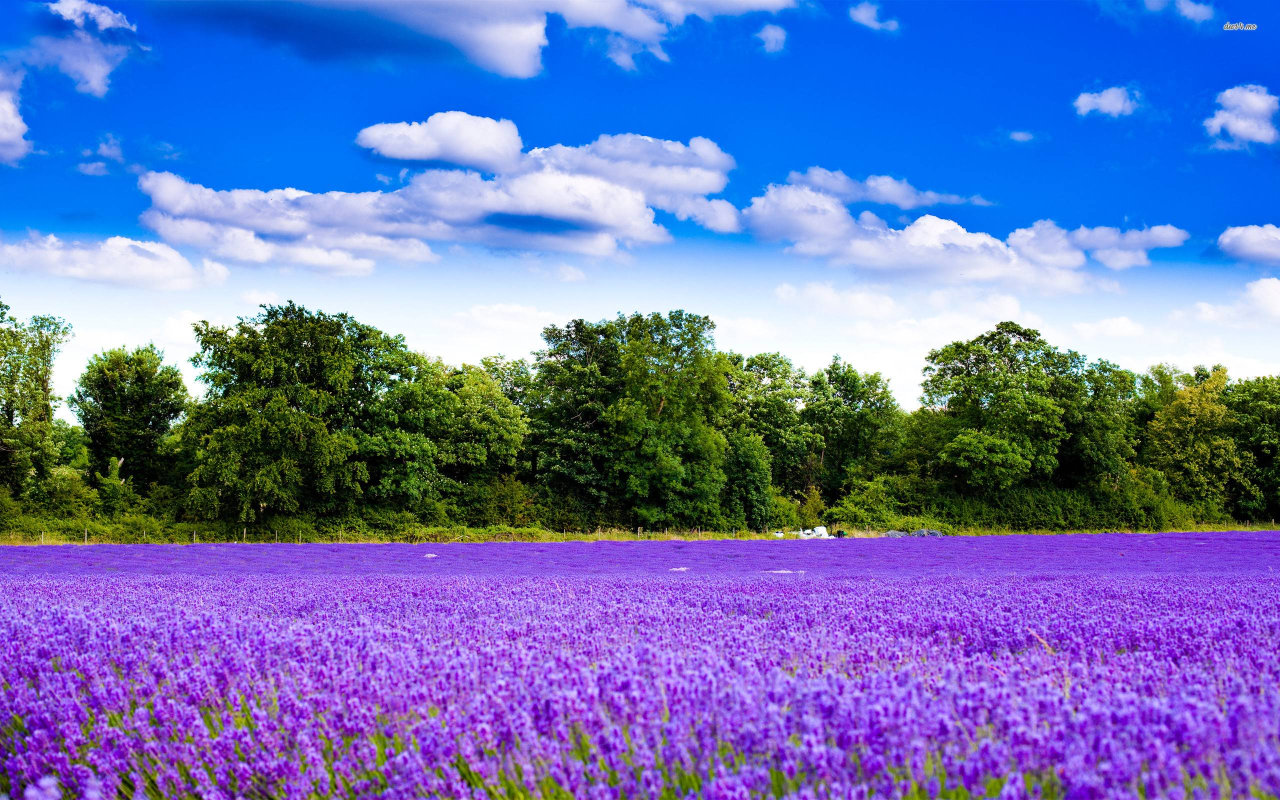 Flower Garden Wallpaper lavender flower wallpapers - wallpaper cave
