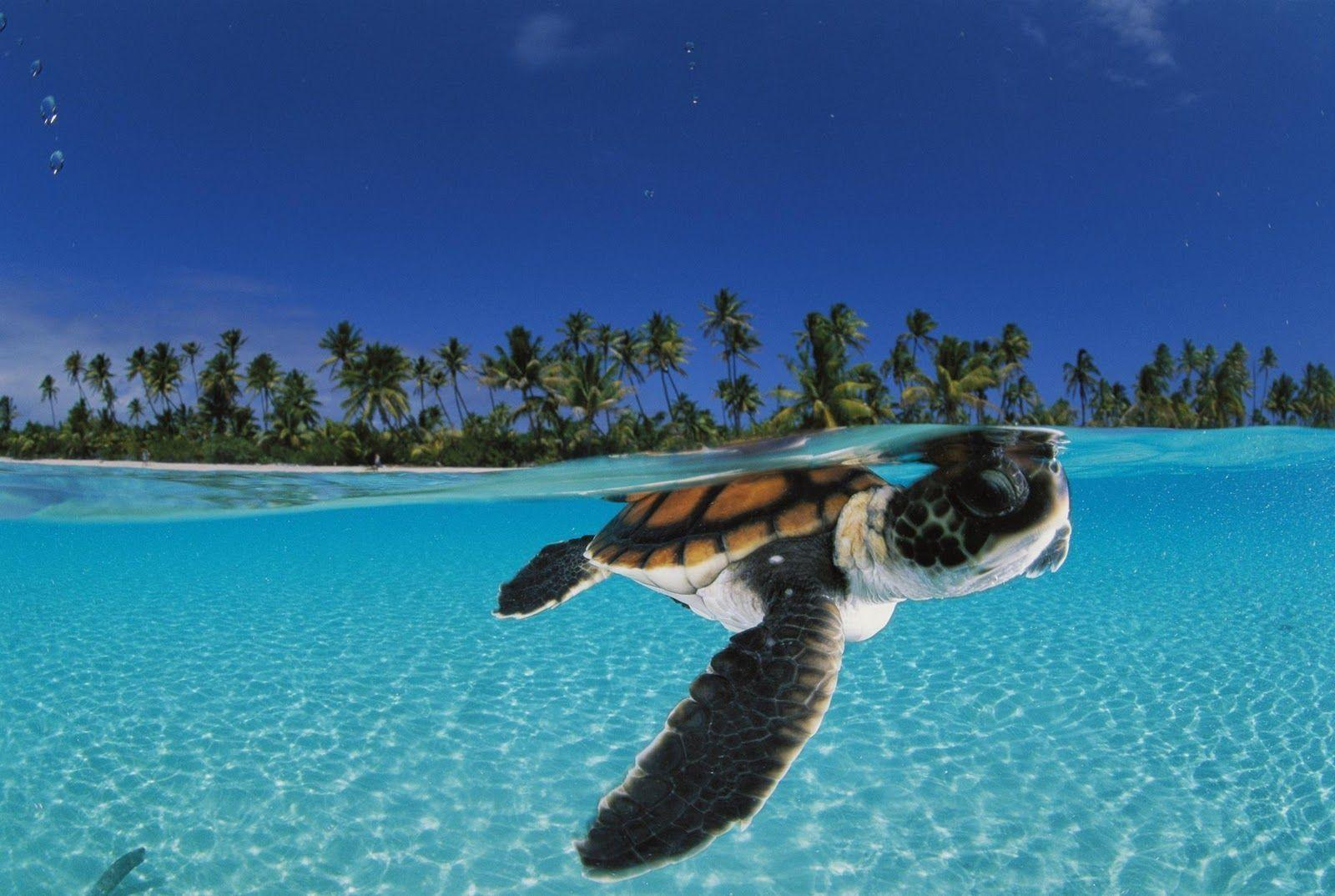 Sea Turtle Wallpapers 11278 1600x1074 px