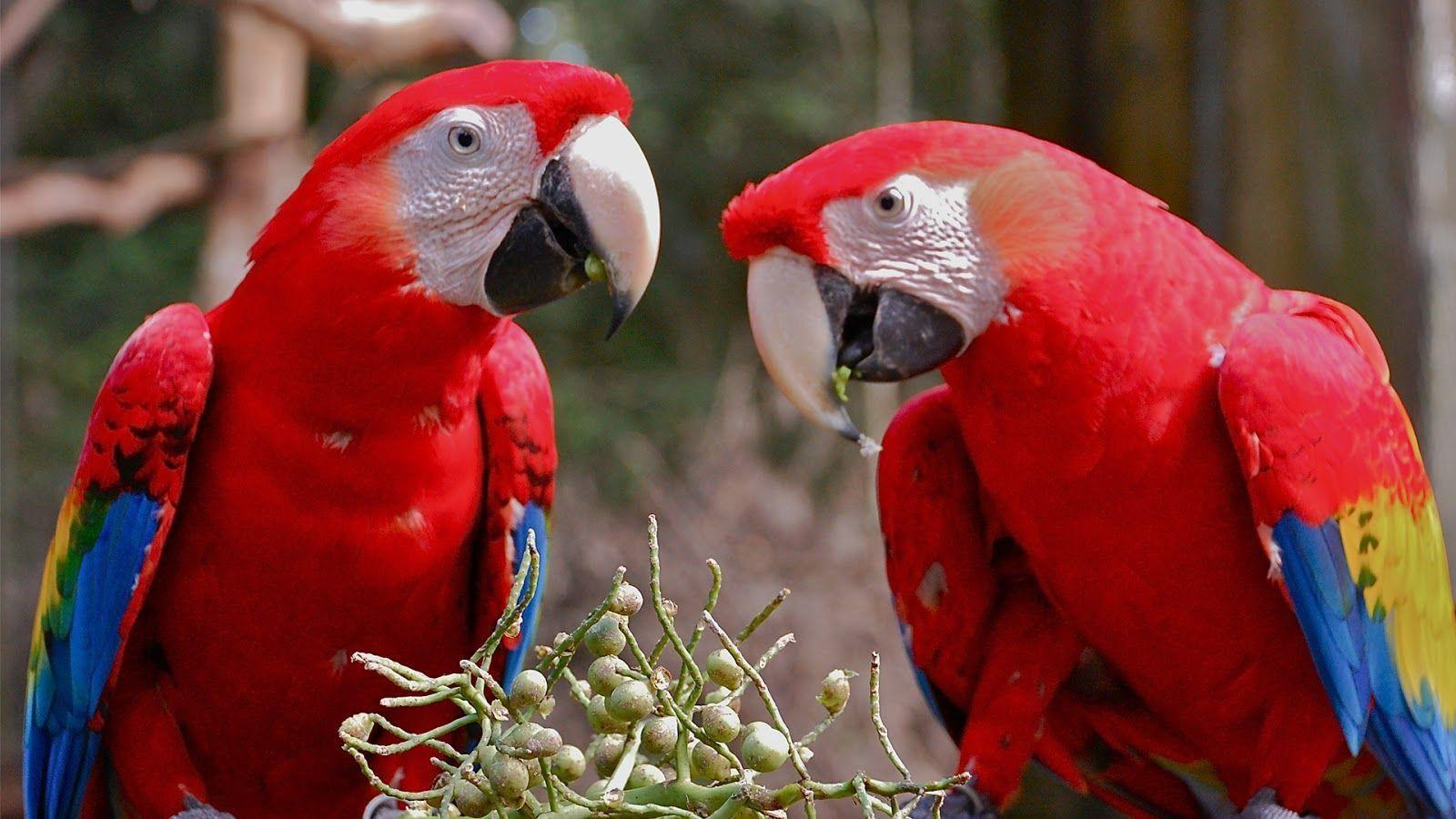 Animals For > Macaw Parrot Hd Wallpaper