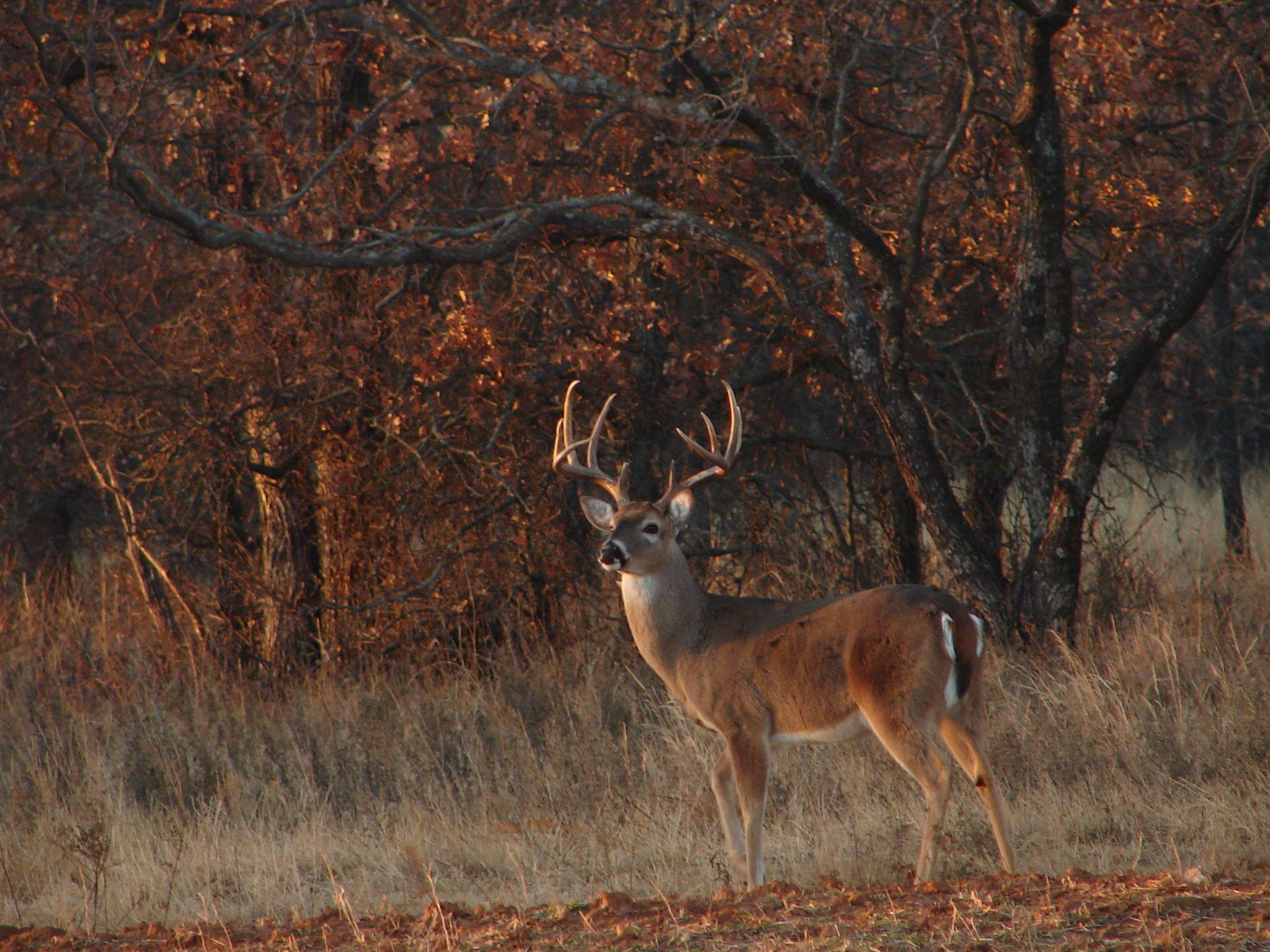 Download Whitetail Deer Hunting Forums Thread Cool Pics Age And