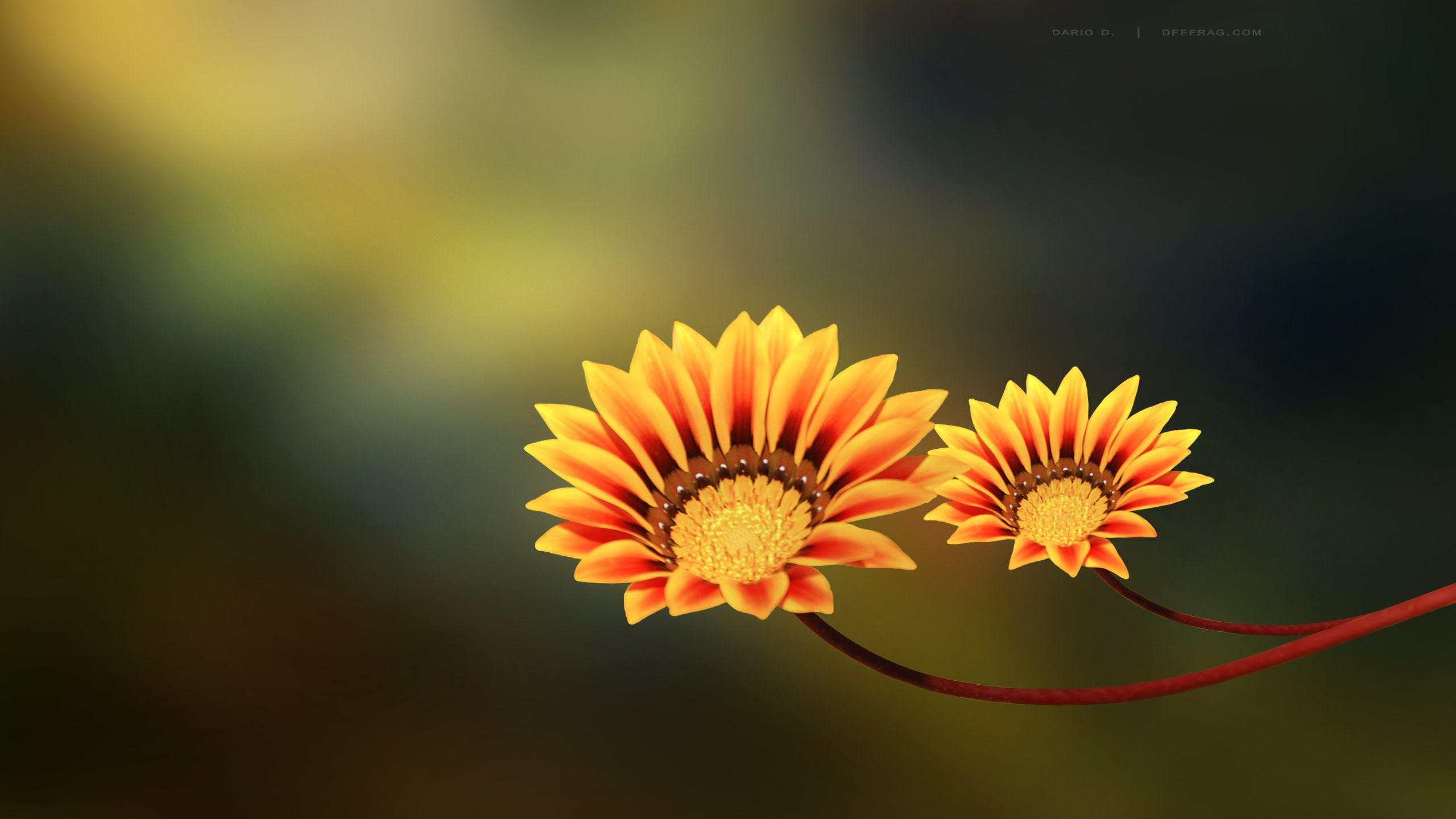 aquarius flower wallpaper hd - photo #34