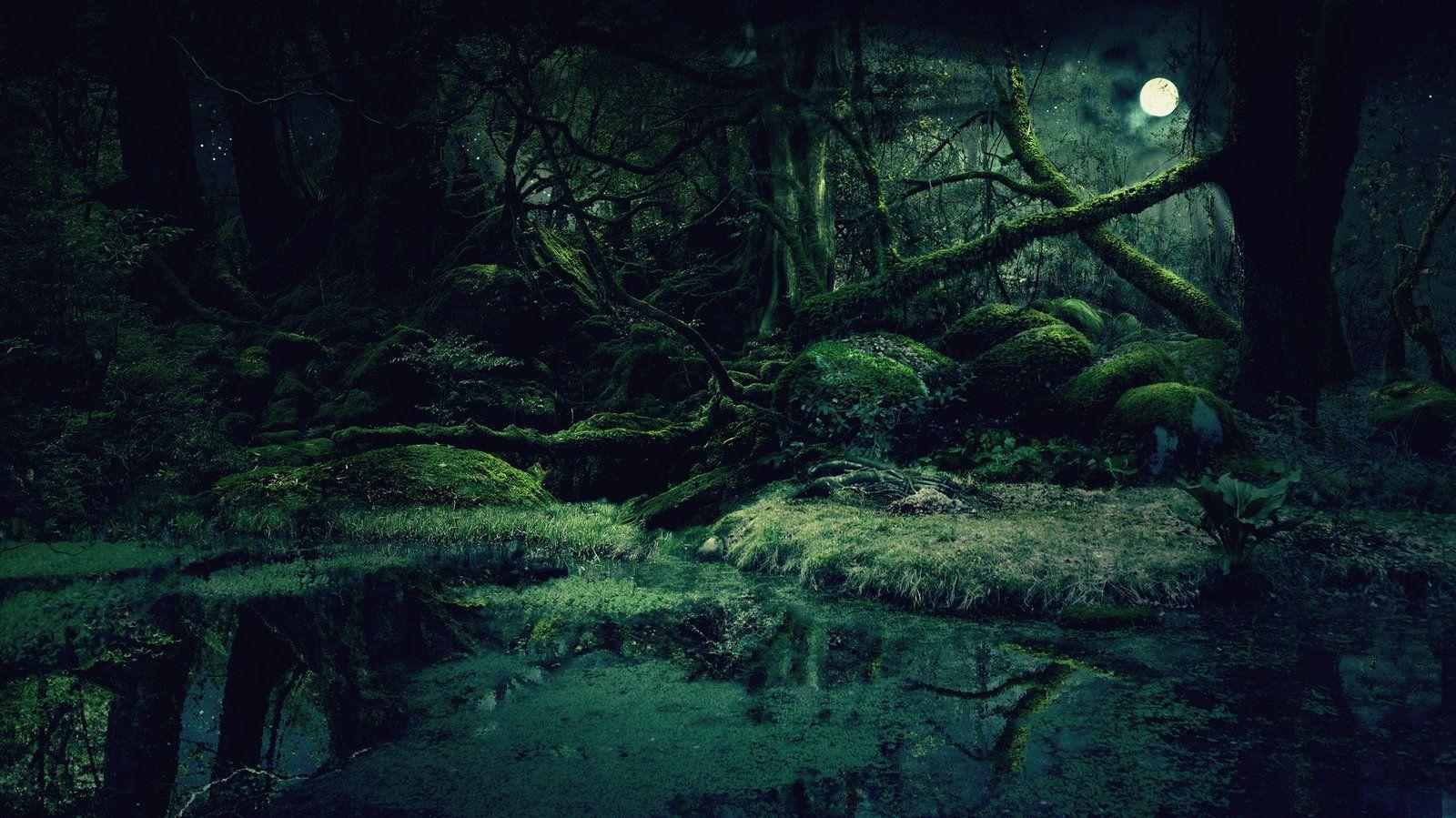 Forest Background Images - Wallpaper Cave
