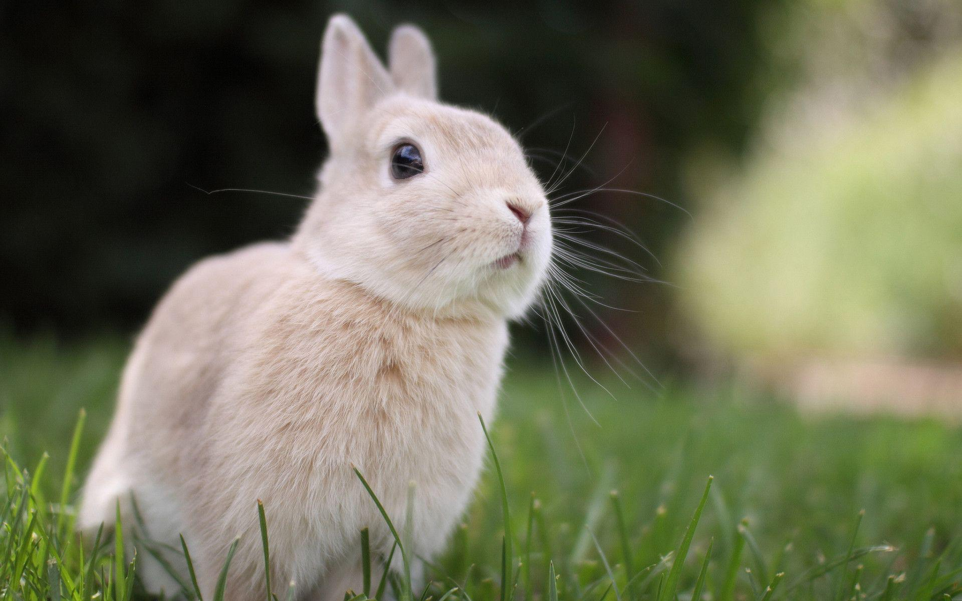 Free bunny wallpapers wallpaper cave - Easter bunny wallpaper ...