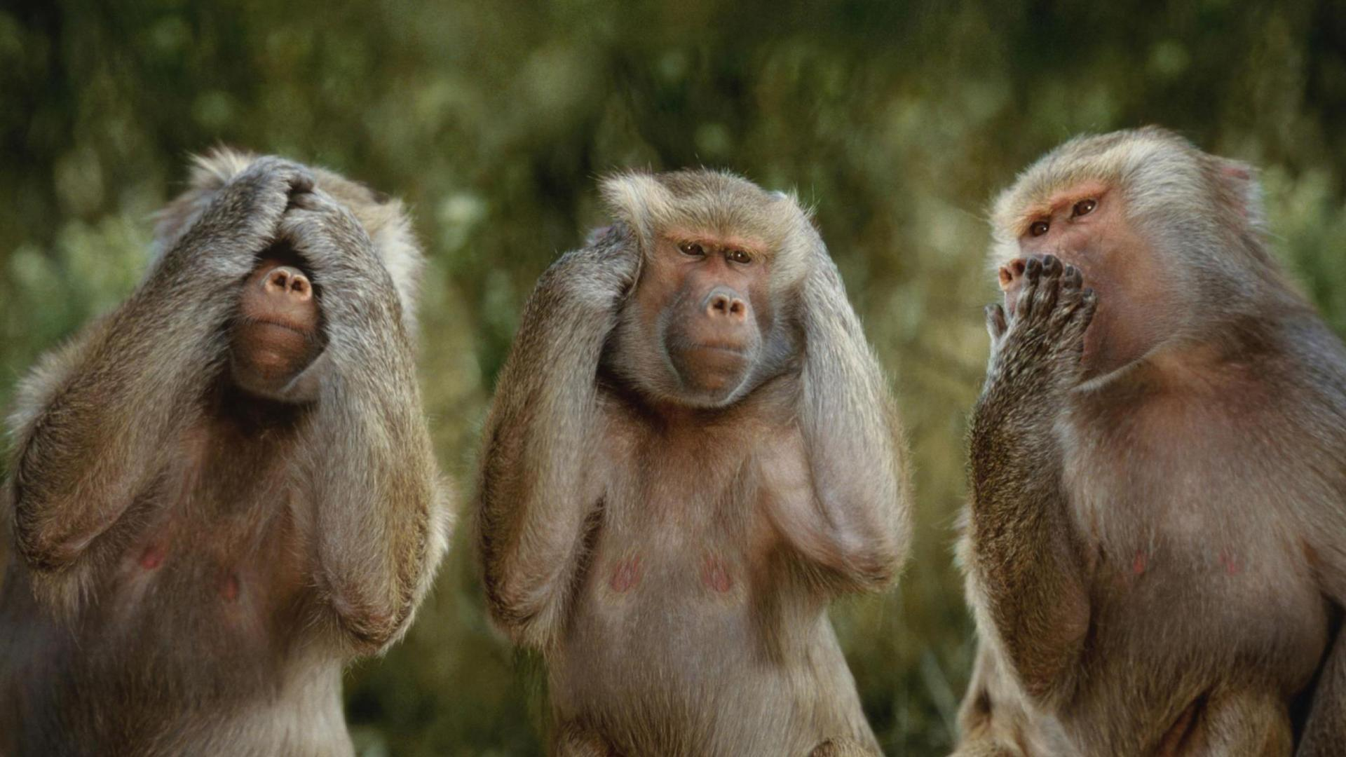 168 Monkey Wallpapers | Monkey Backgrounds Page 4