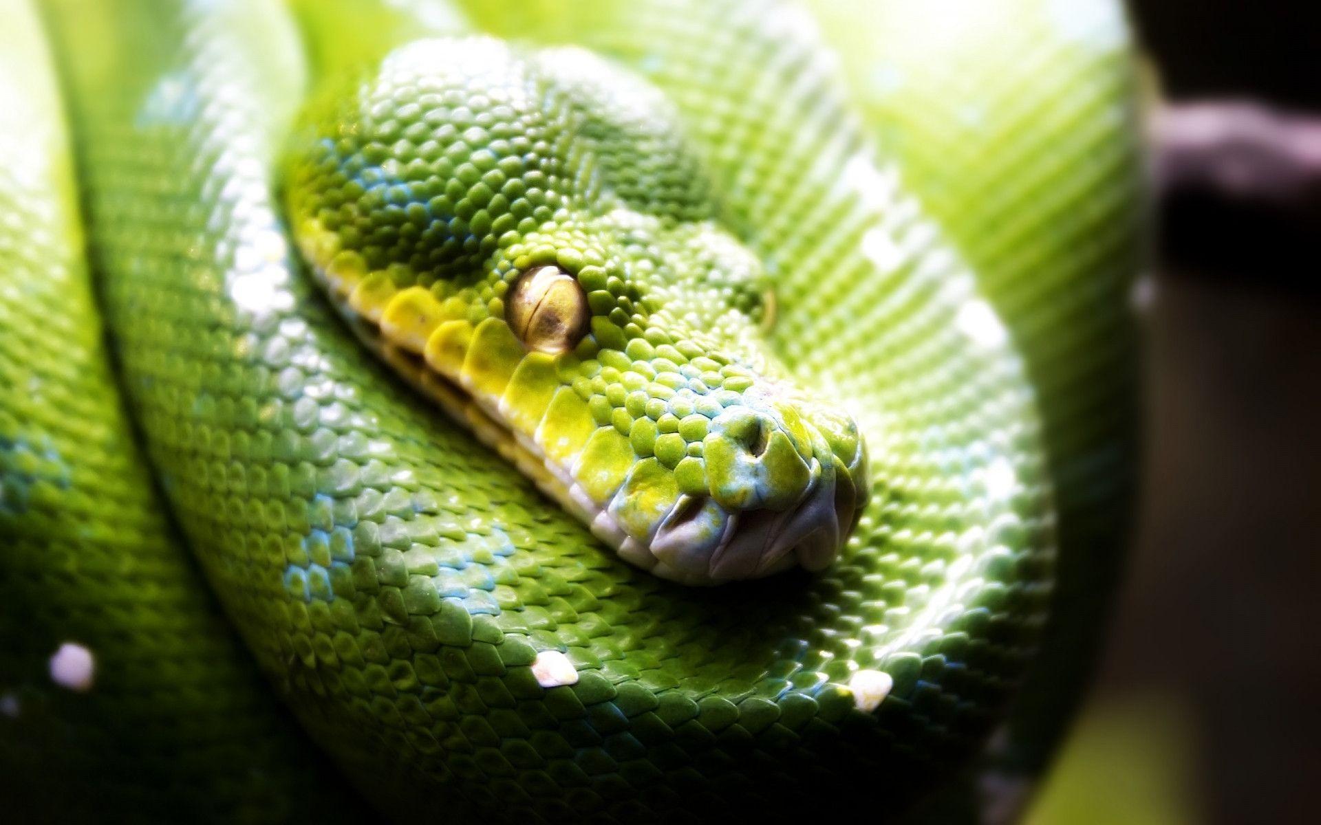Green snake wallpaper - 1126176