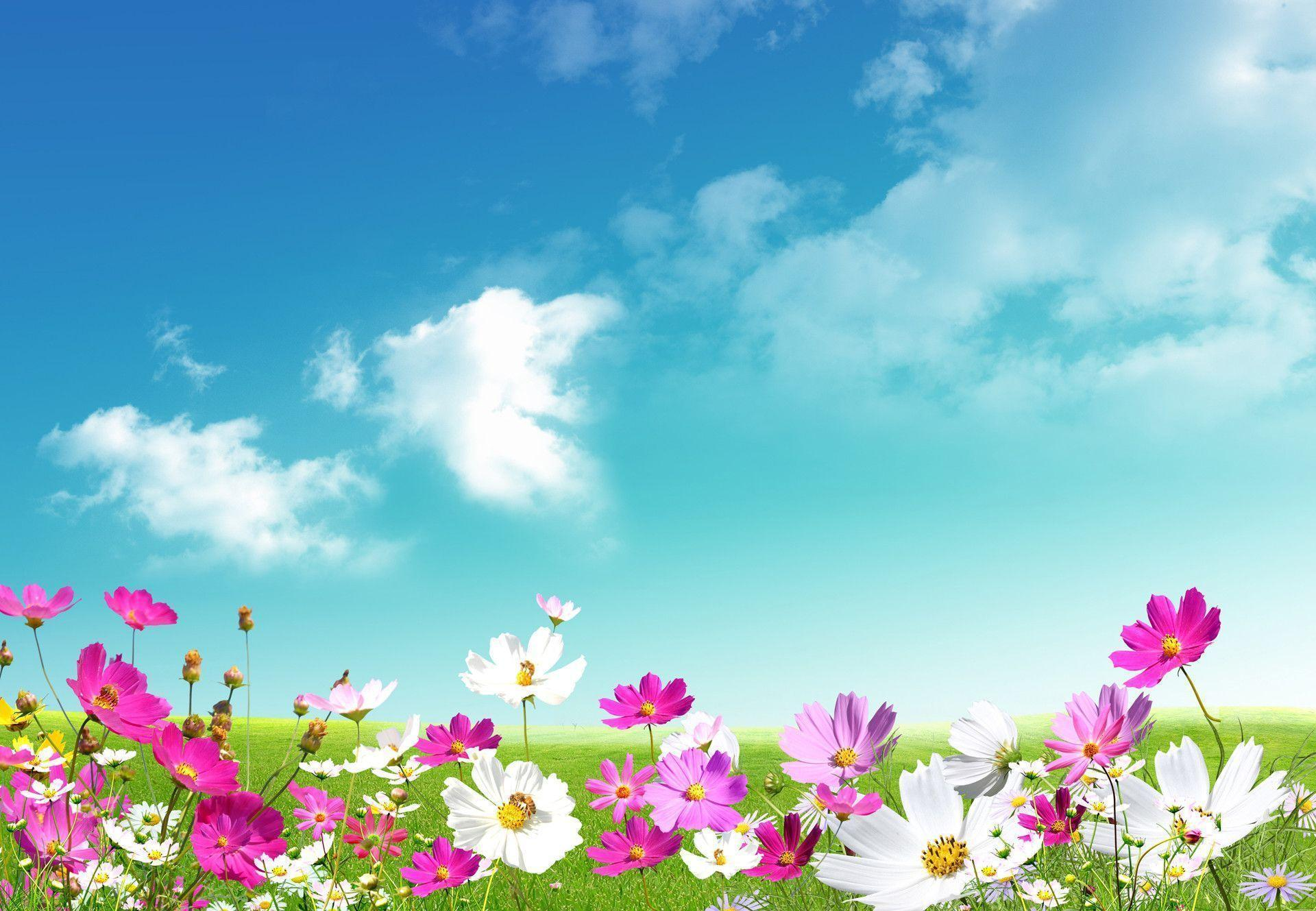 good wallpapers spring -#main