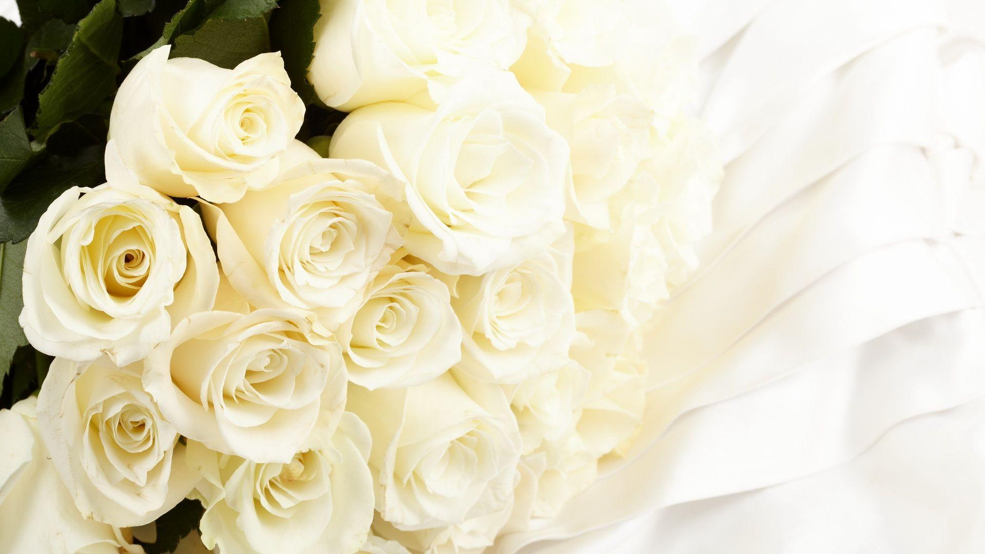 White Rose Wallpapers Pictures