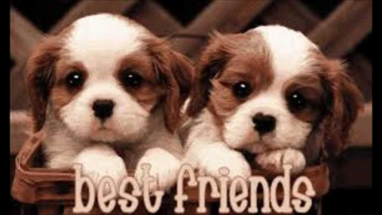 Best Friends Forever Wallpapers - Wallpaper Cave