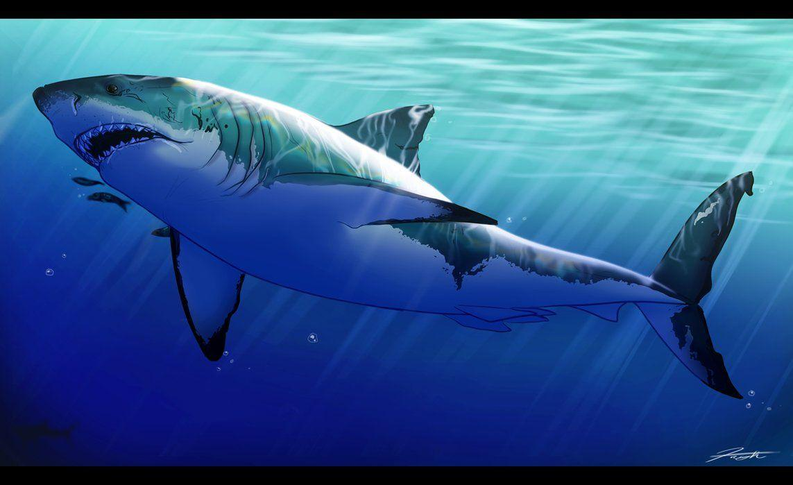 great white shark The great white shark and guadalupe island if you want to swim with a great white shark you can come along on my next expedition to mexico a select few of us will be going cage-free - which is about a close to a totally free fish-like experience as any.
