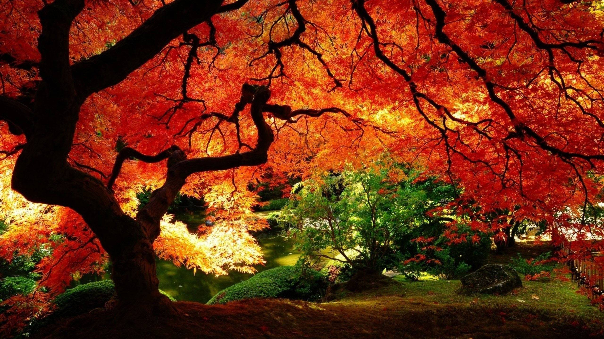fall trees wallpapers wallpaper cave