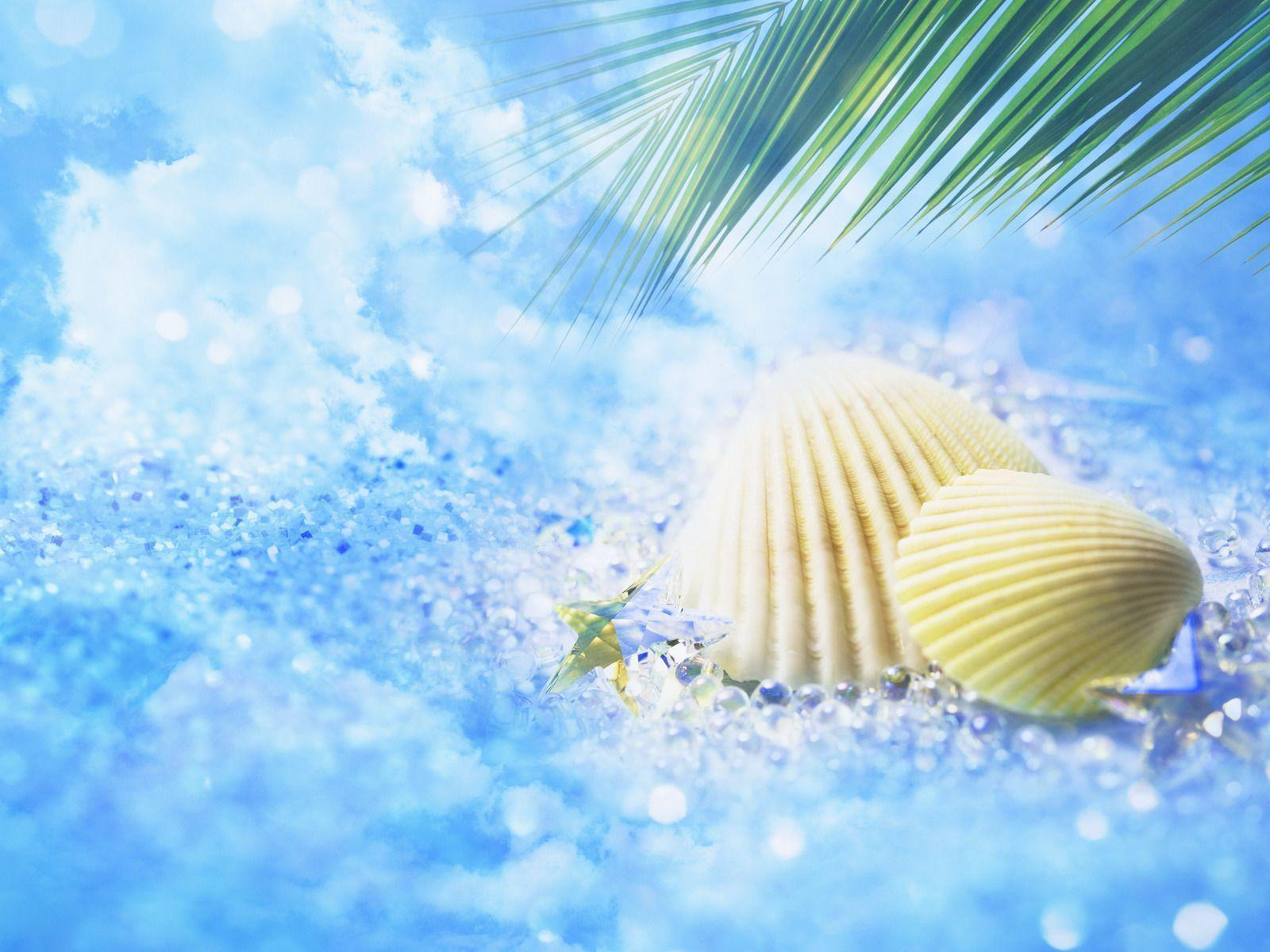 Sea Shell Picture Wallpapers