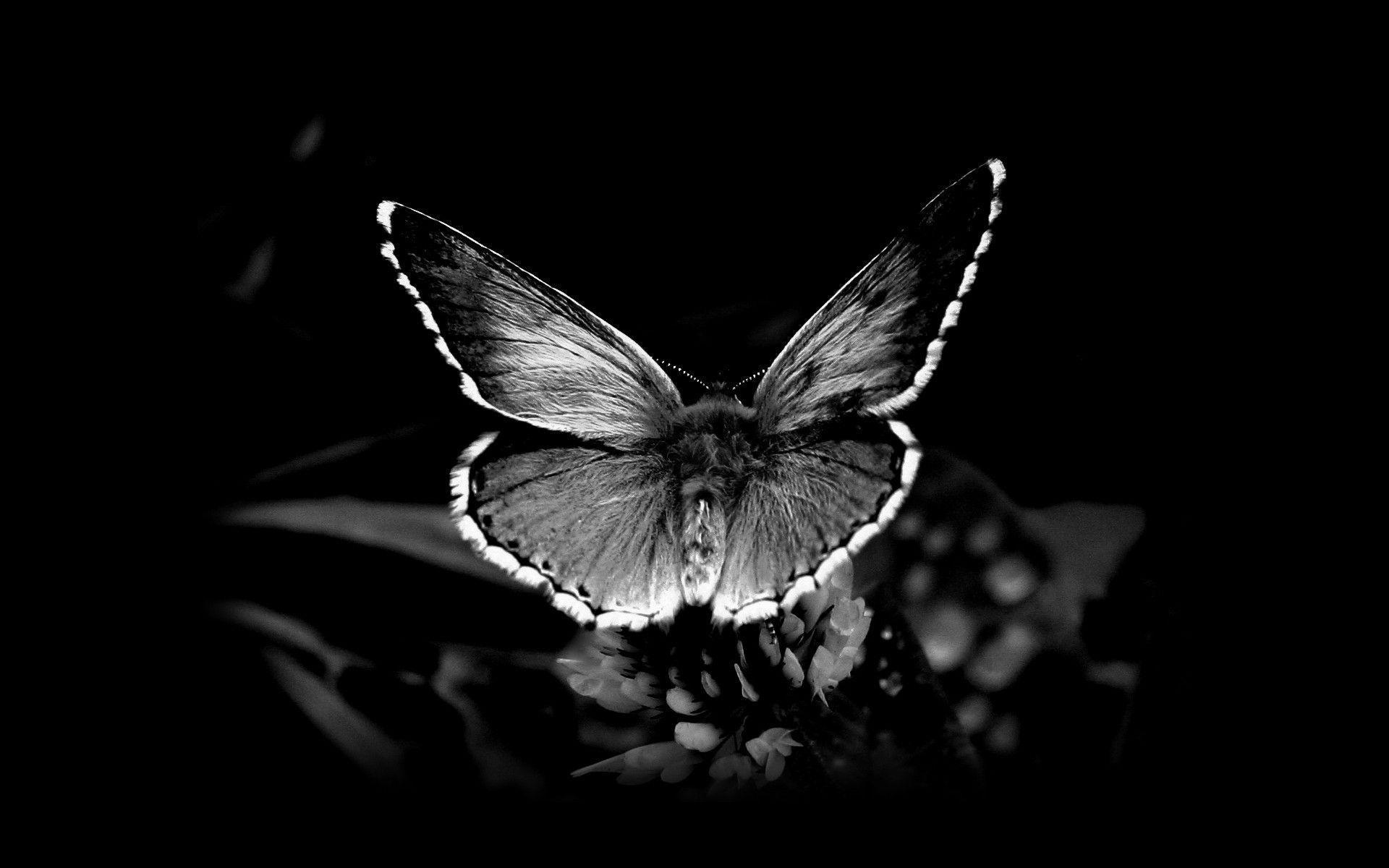 Black And White Nature Wallpapers - Wallpaper Cave