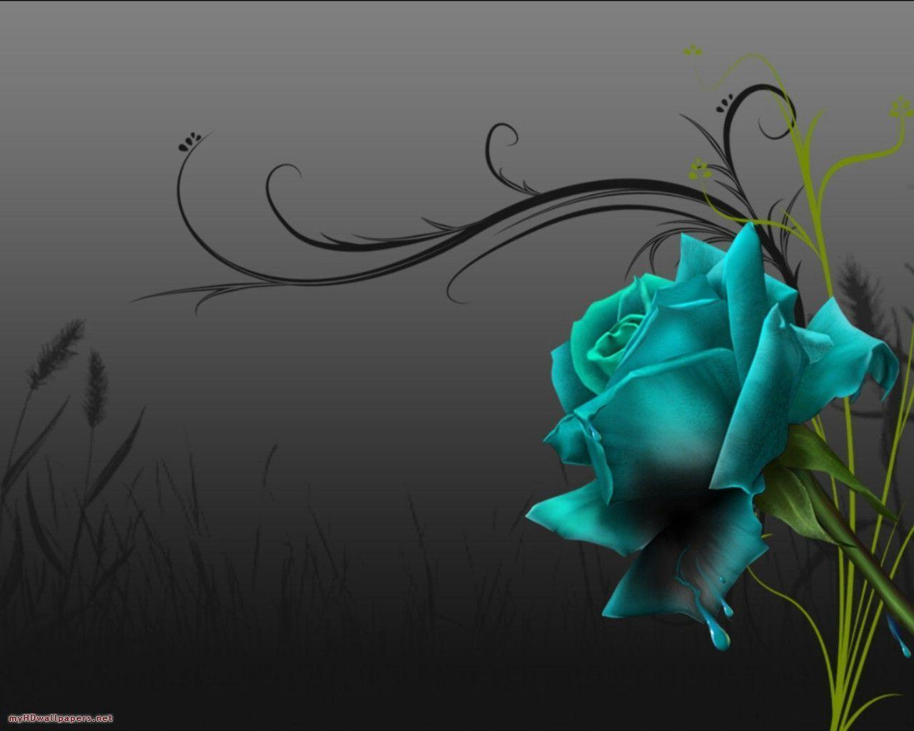 Black Rose Wallpapers 3234 Backgrounds