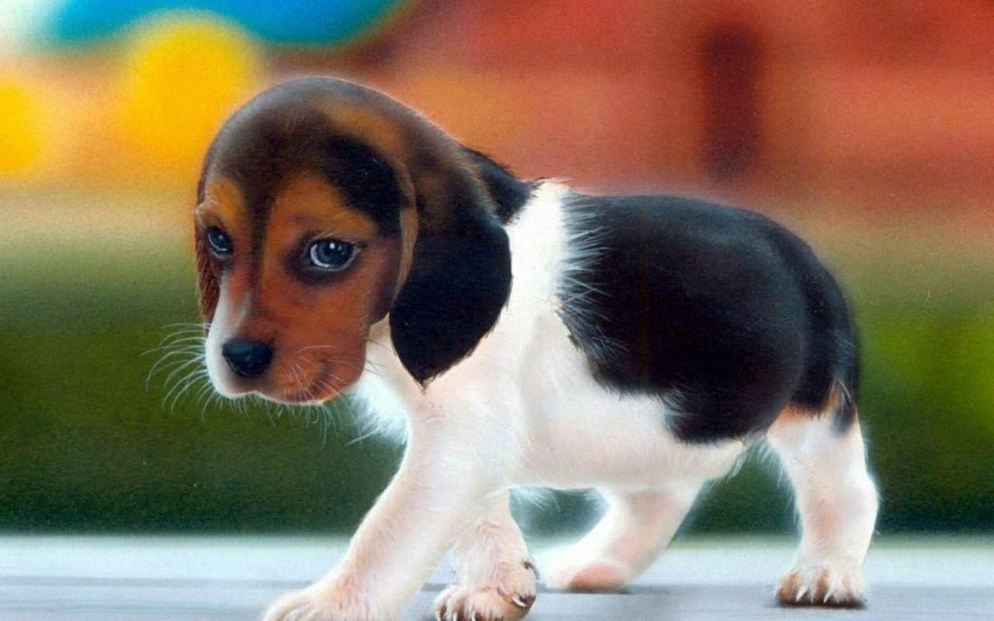 Cute Dogs Wallpapers HD Pictures