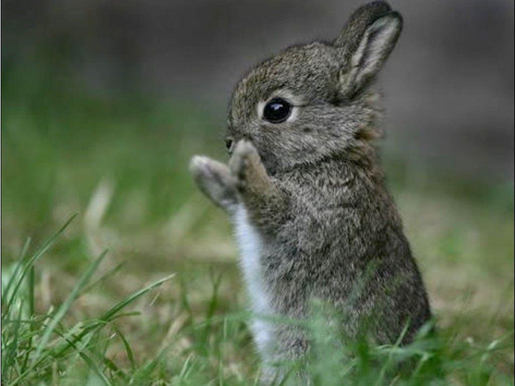 Cute Bunny Rabbits Wallpaper