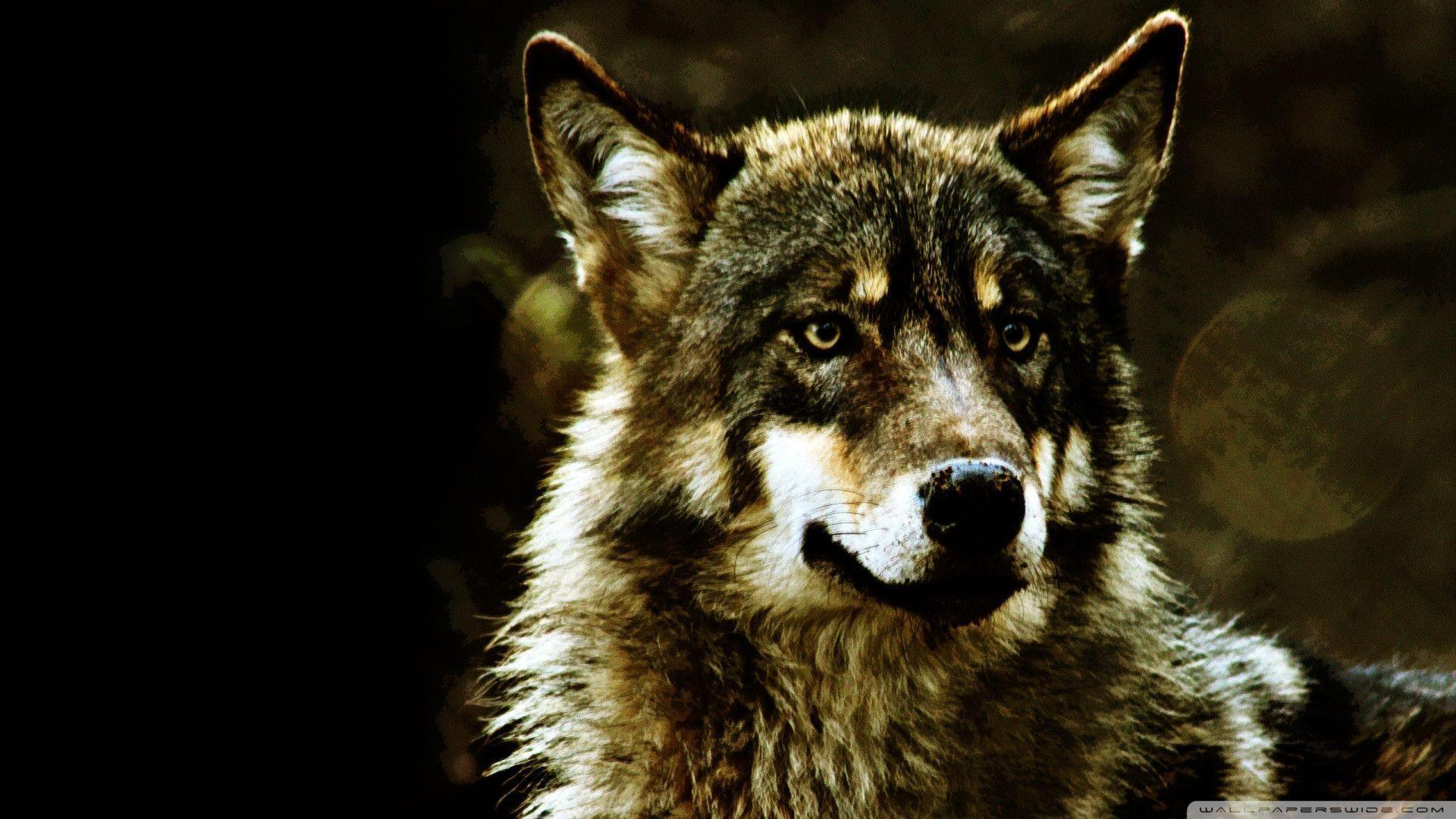 Download Wolf Wallpaper 1920x1080 | Wallpoper #435840
