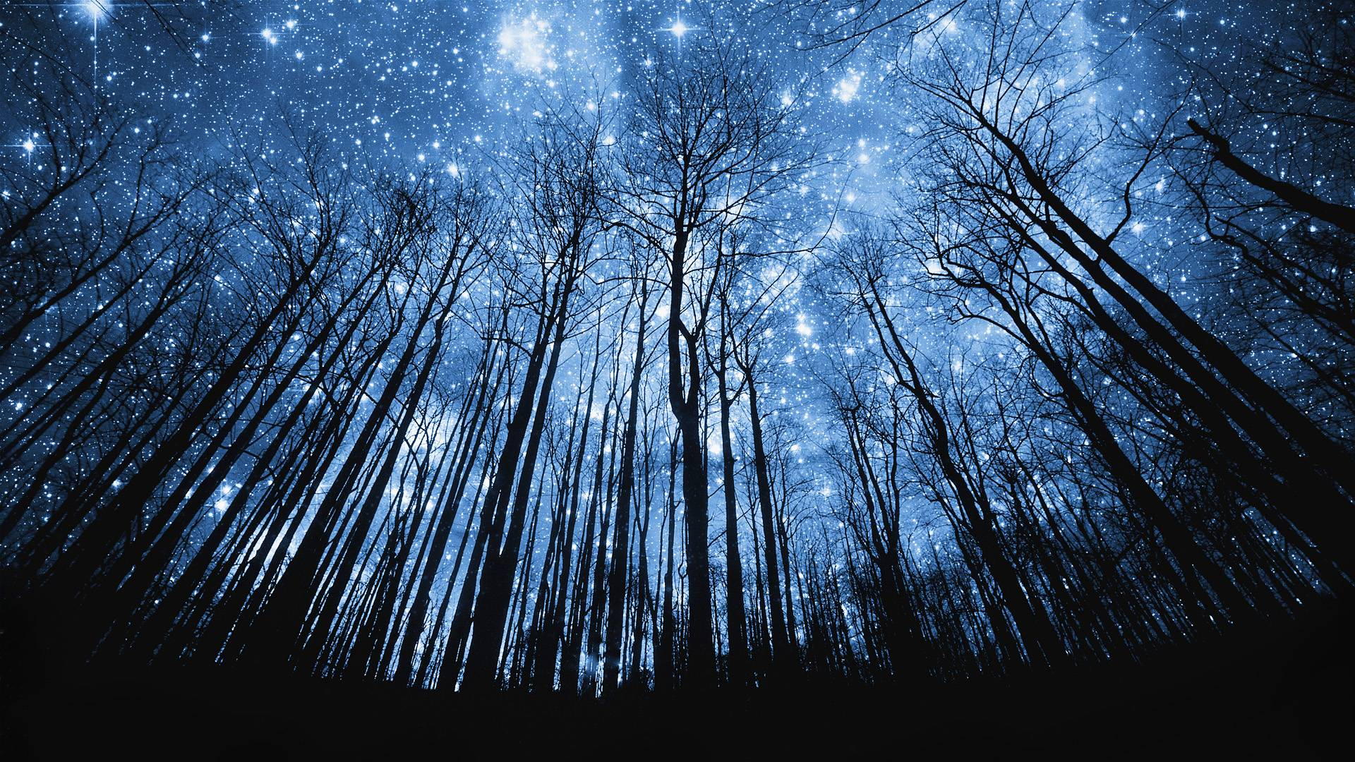 Tree Silhouette Against Starry Night Sky, HQ Backgrounds