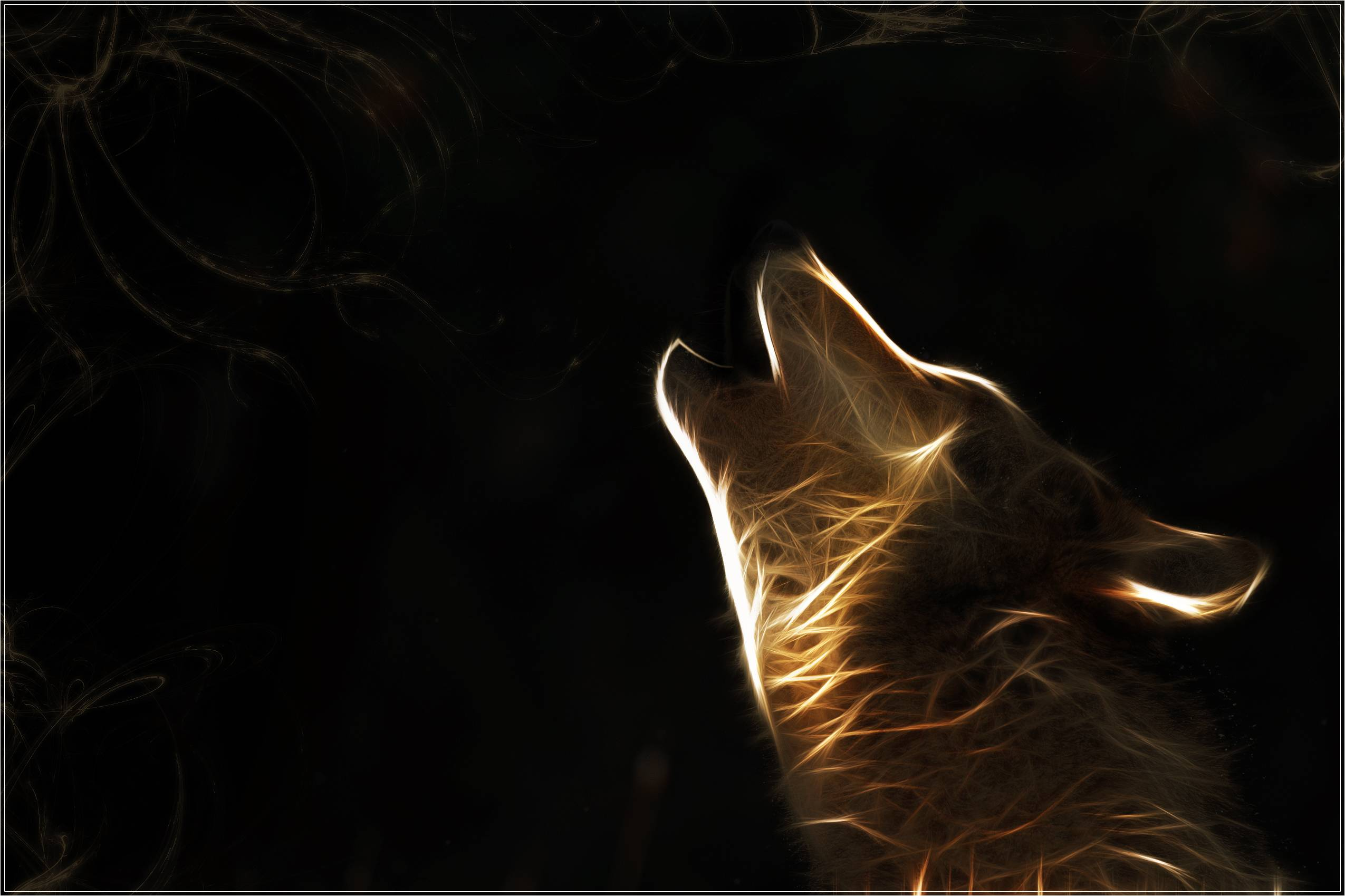 Wallpaper HD Wolf 18 16527 And Background