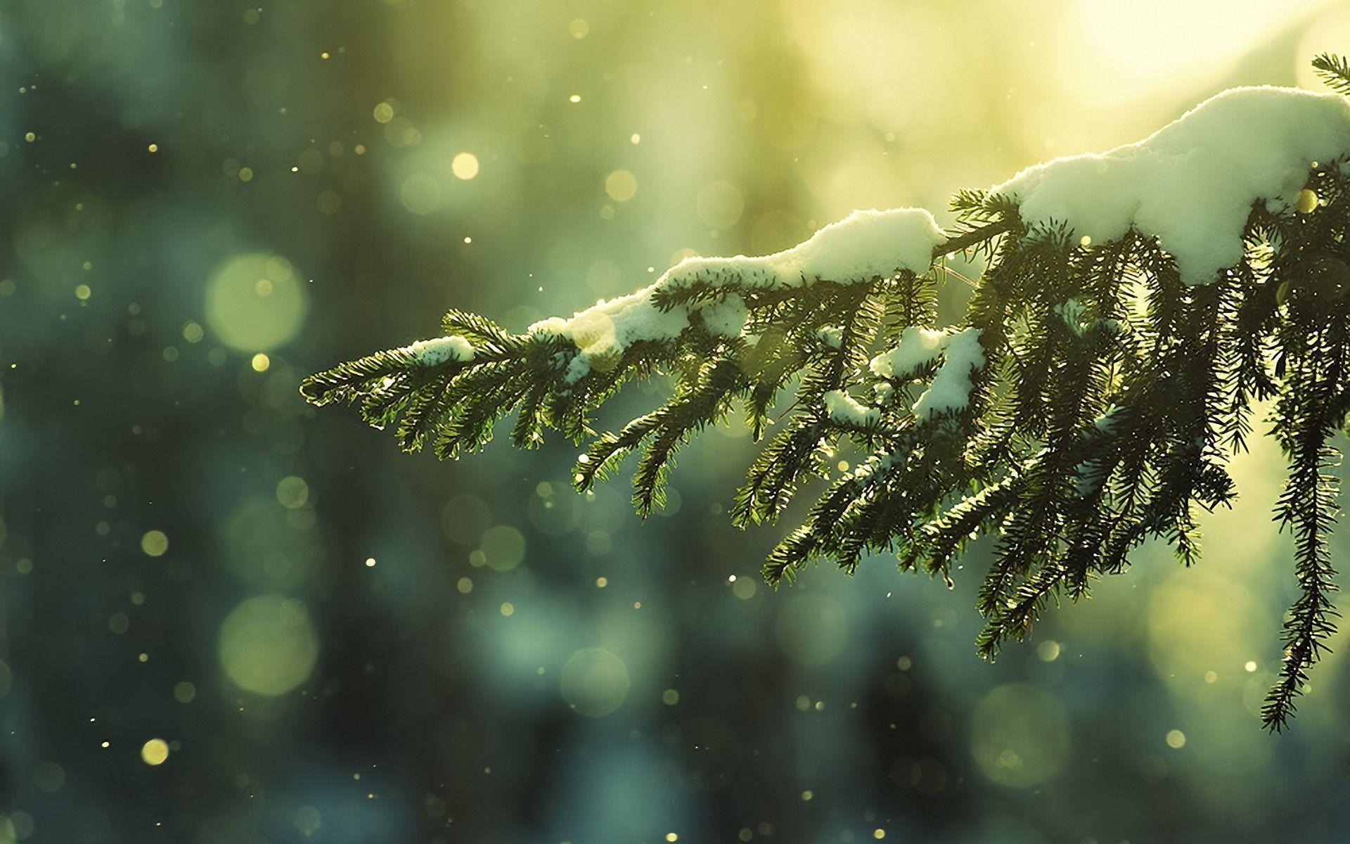 Christmas Snow wallpaper - 496883
