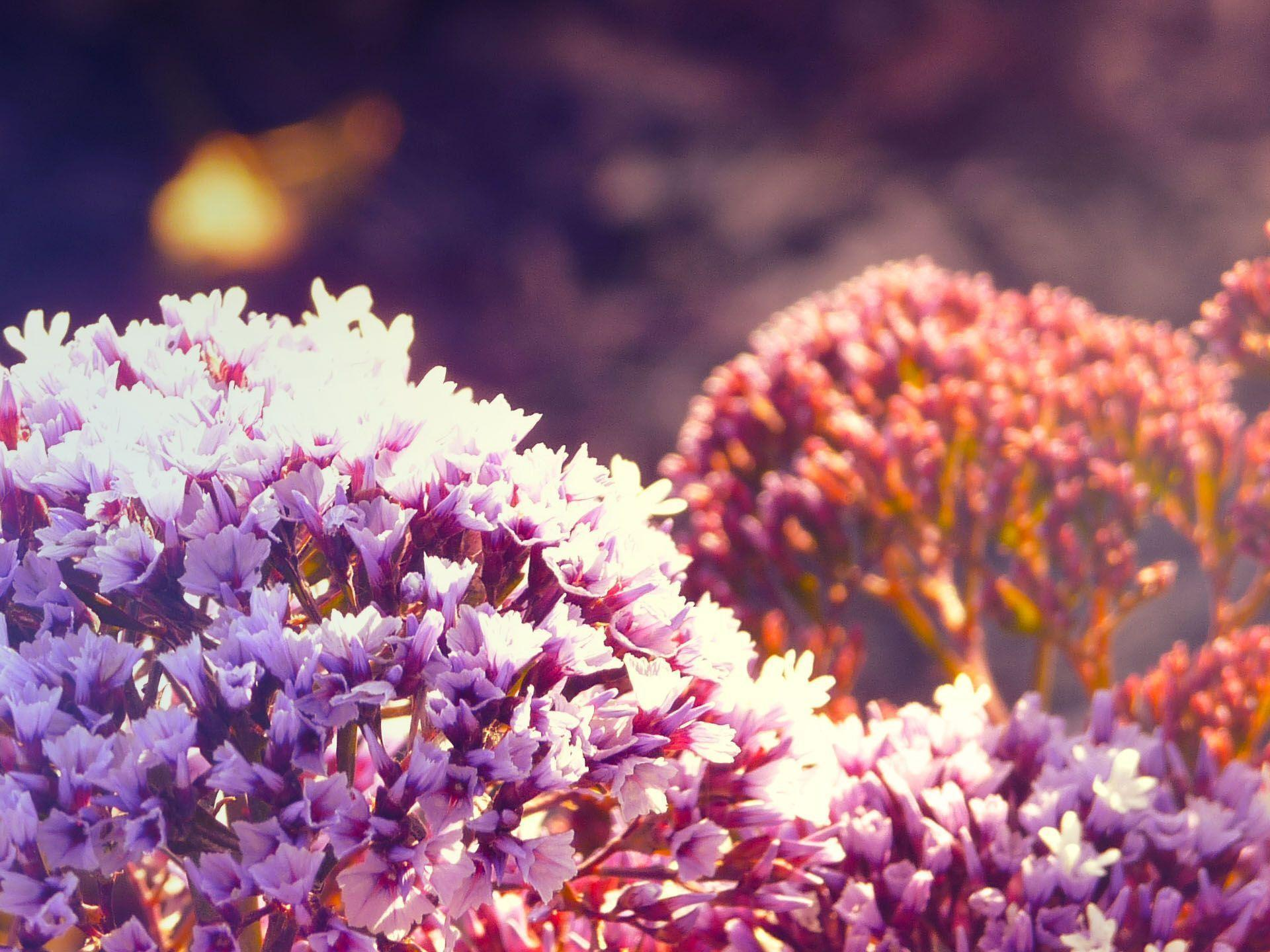bright flower wallpapers wallpaper cave