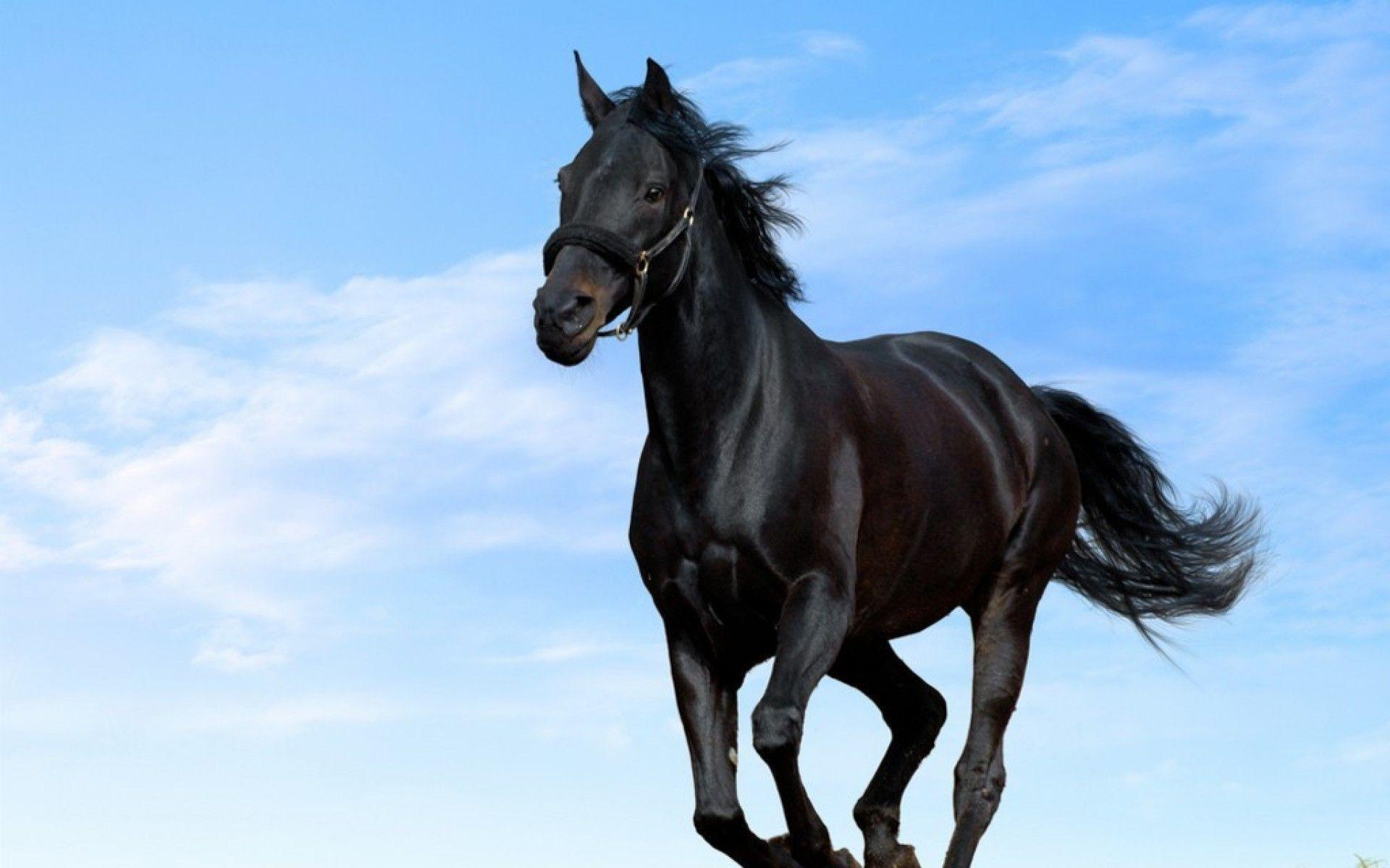 Wallpapers For 3d Black Horse Wallpaper