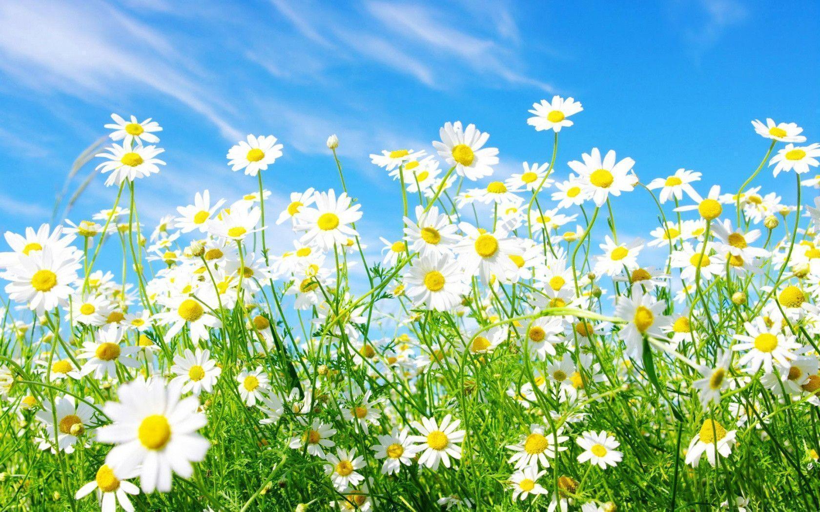 spring flower desktop backgrounds wallpaper cave