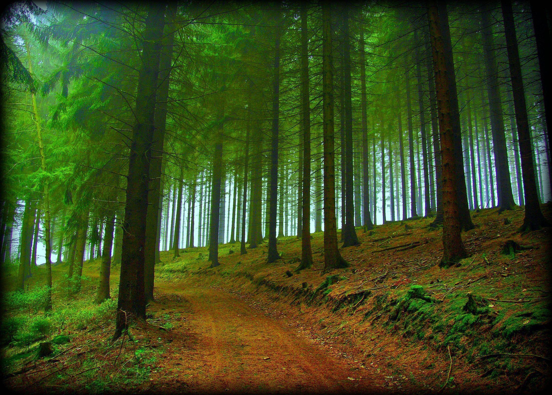 Free Desktop Wallpapers Trees