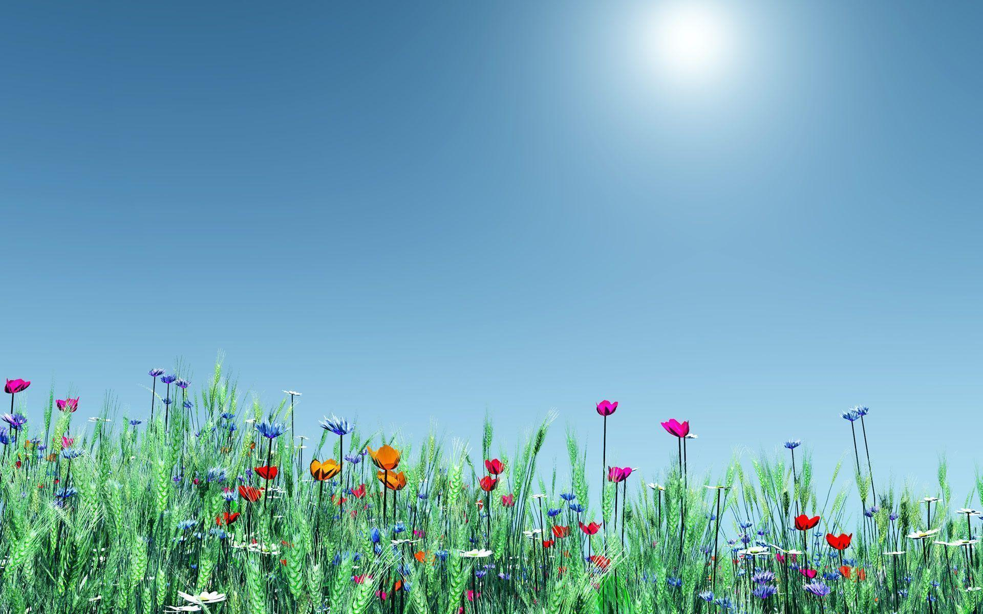 Spring Flowers Backgrounds Hd Backgrounds 9 HD Wallpapers