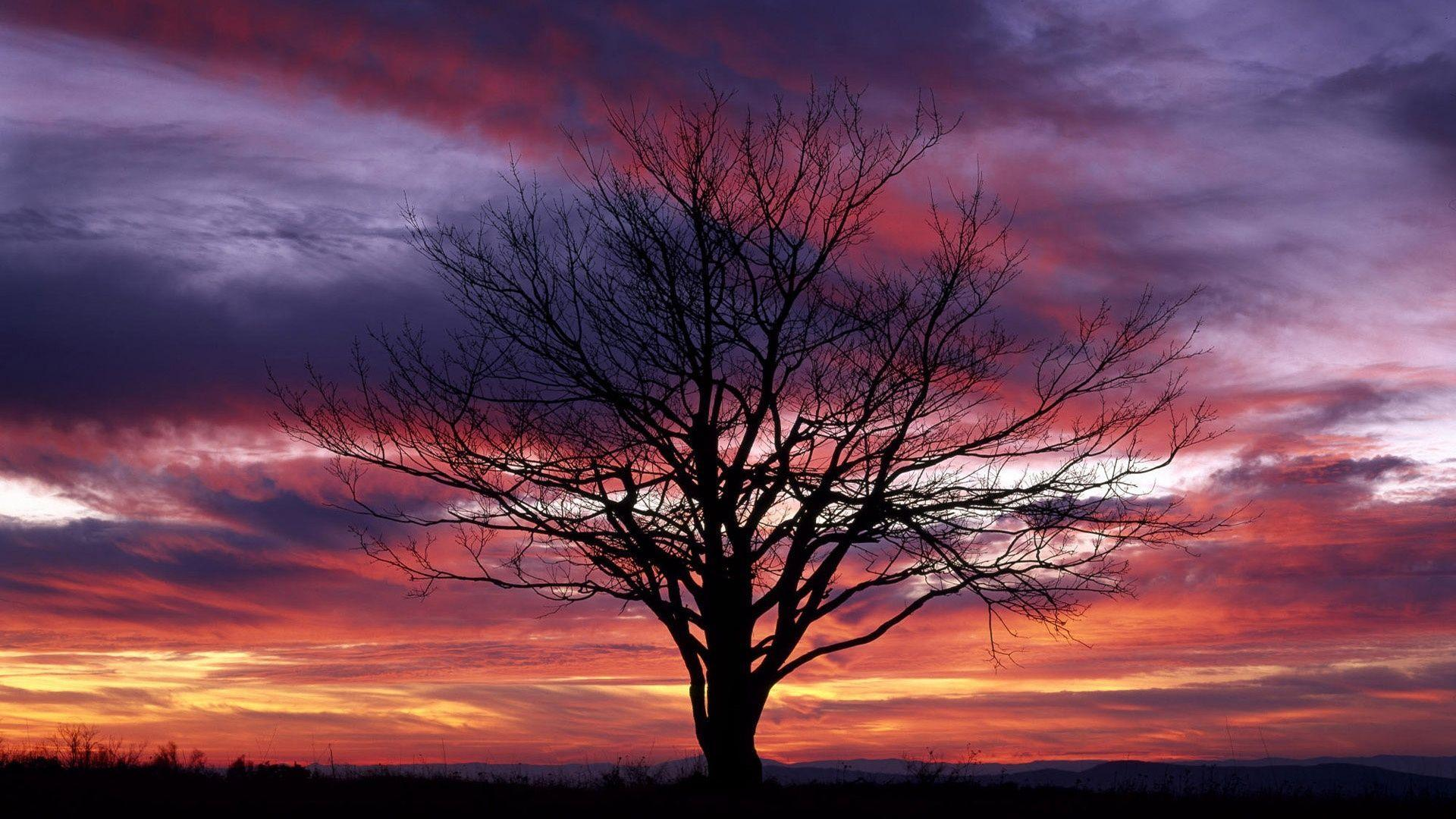 Cool Tree Backgrounds