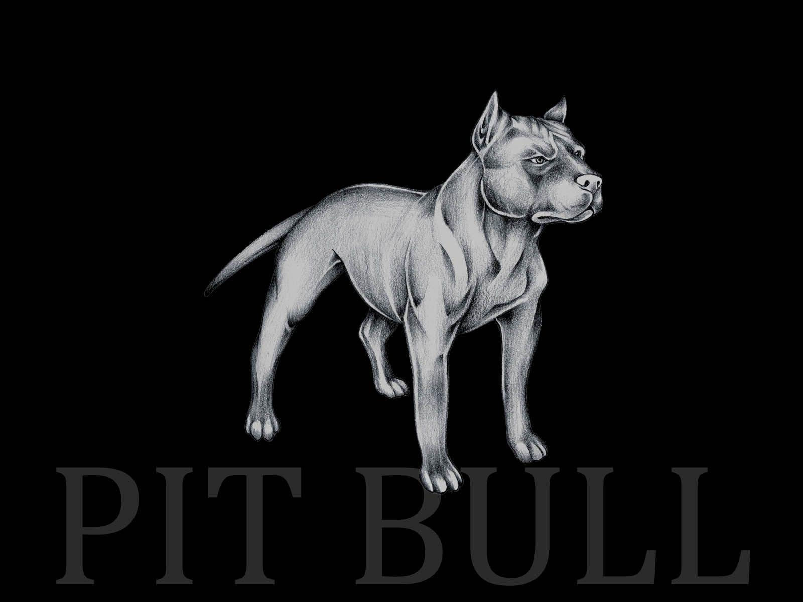 Pitbull wallpapers wallpaper cave - Pitbull dogs pictures wallpaper ...