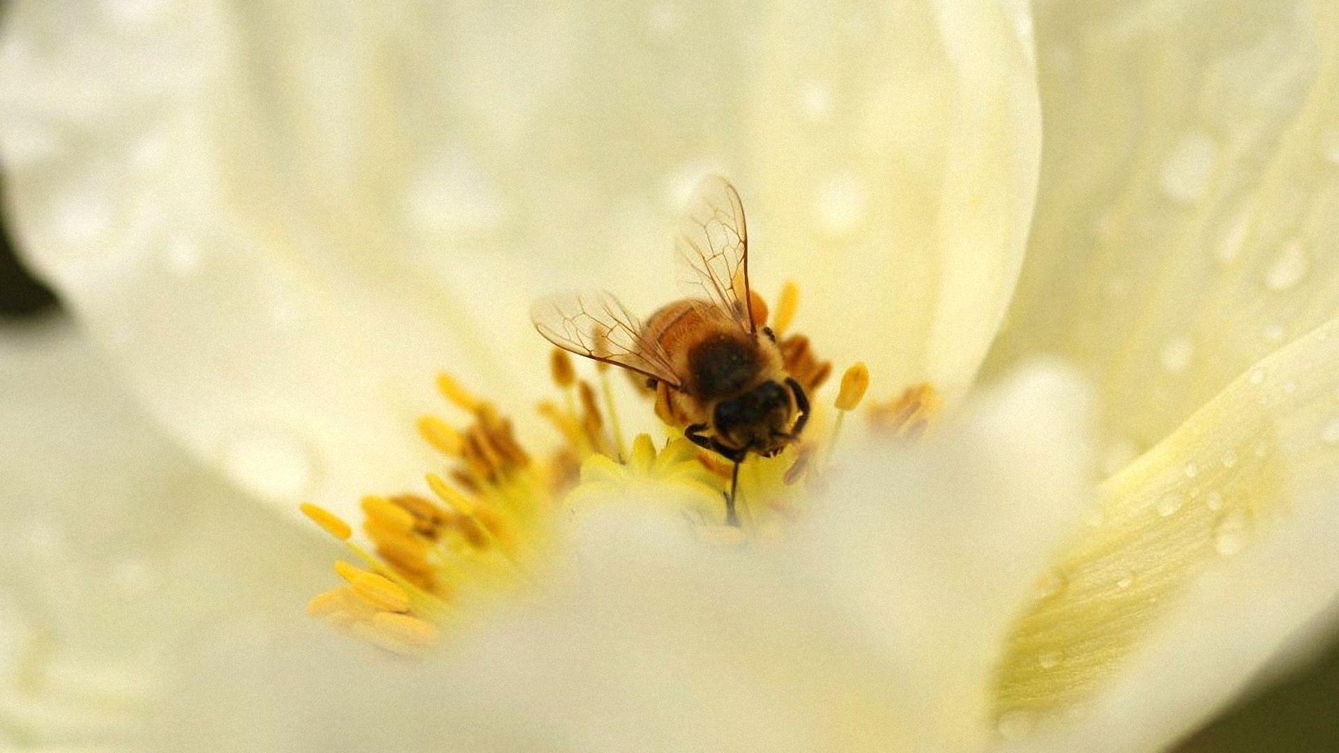 Bee Wallpapers Wallpaper Cave