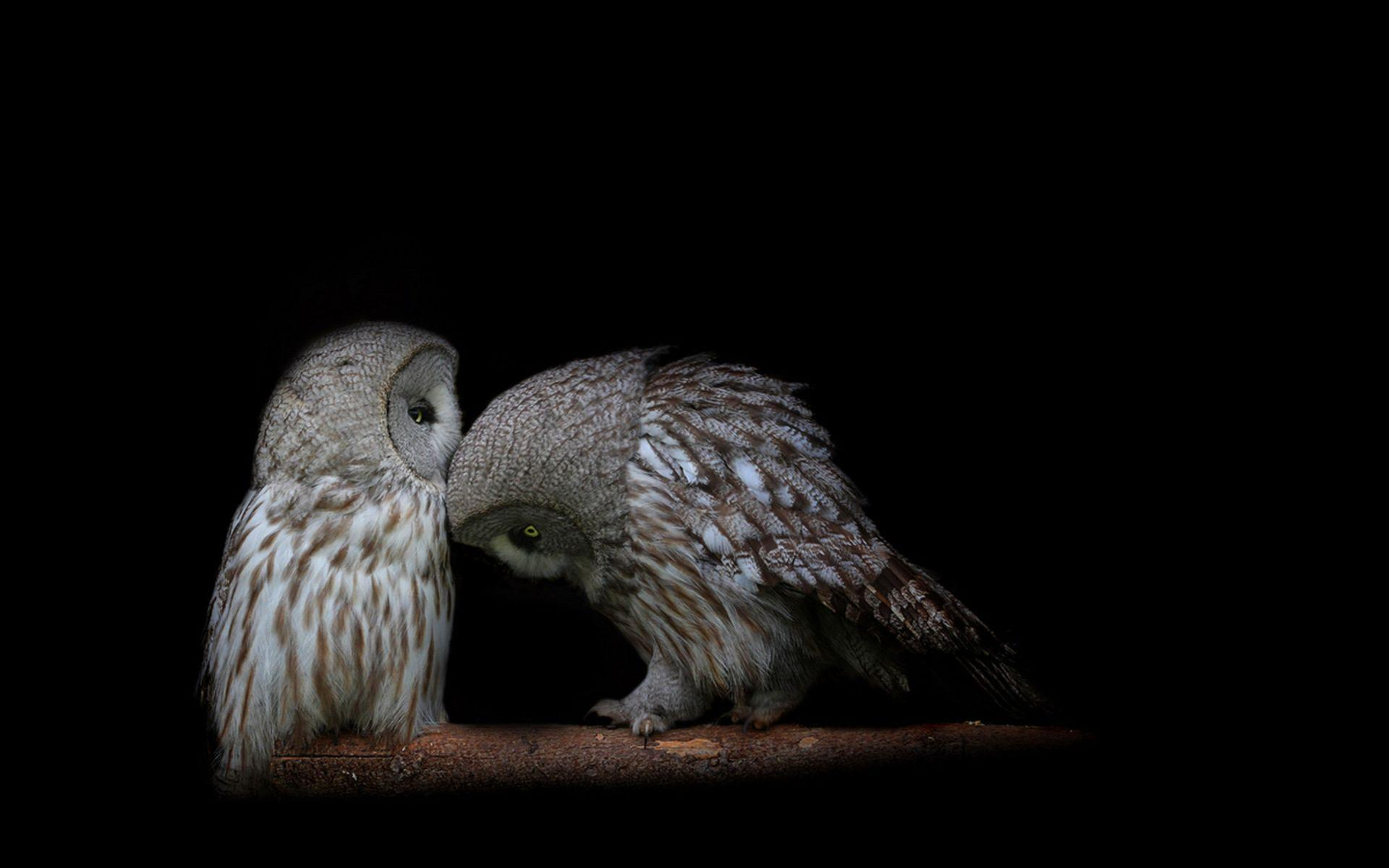 Owl Wallpapers - Wallpaper Cave