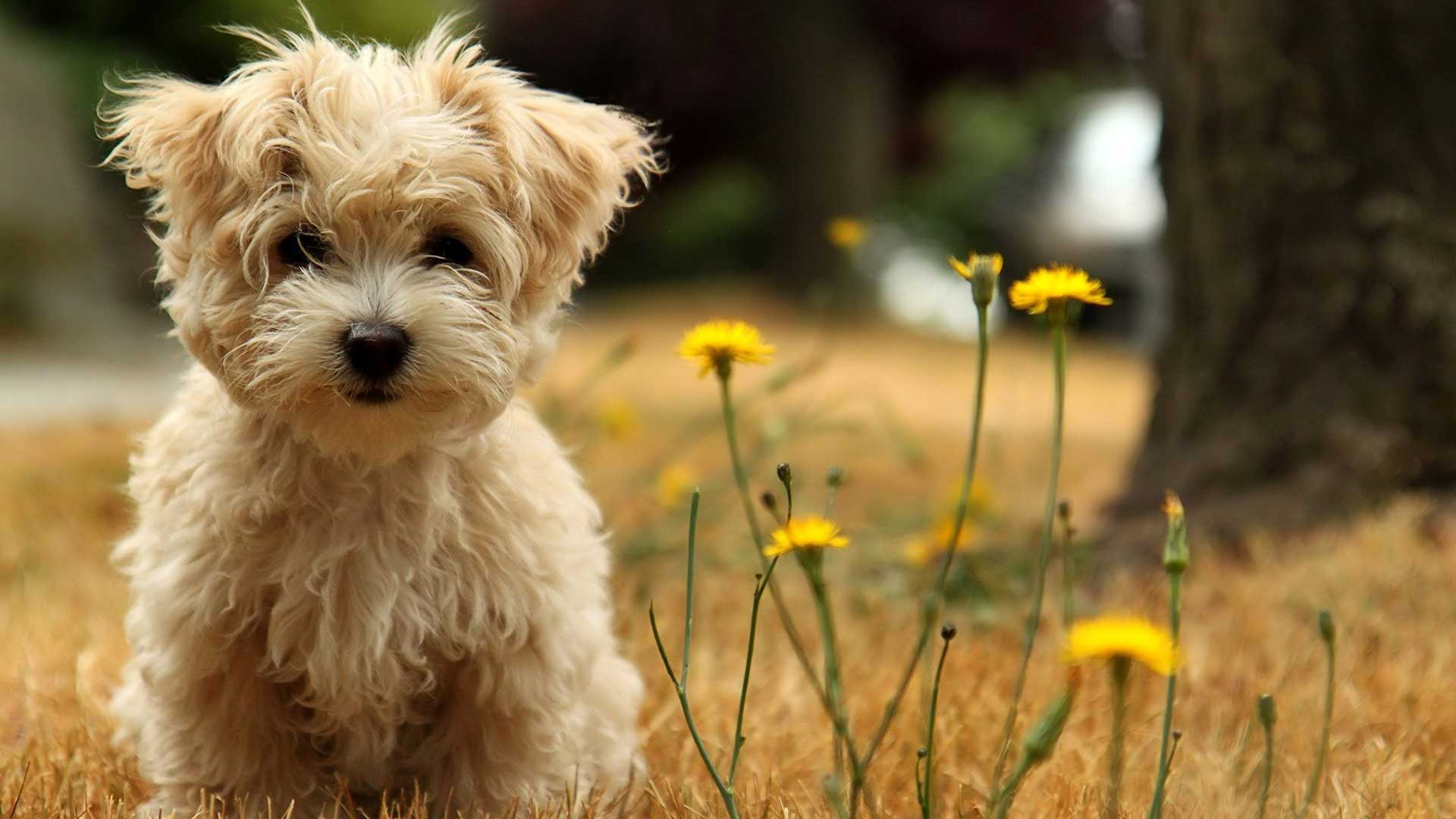 Cute Dog Play with Flower HD Wallpapers
