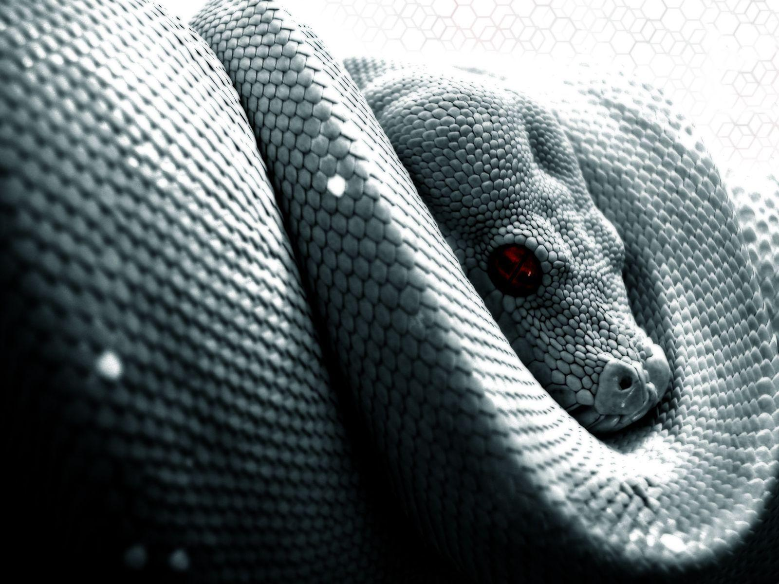 Snake Computer Wallpapers, Desktop Backgrounds 1600x1200 Id: 26823