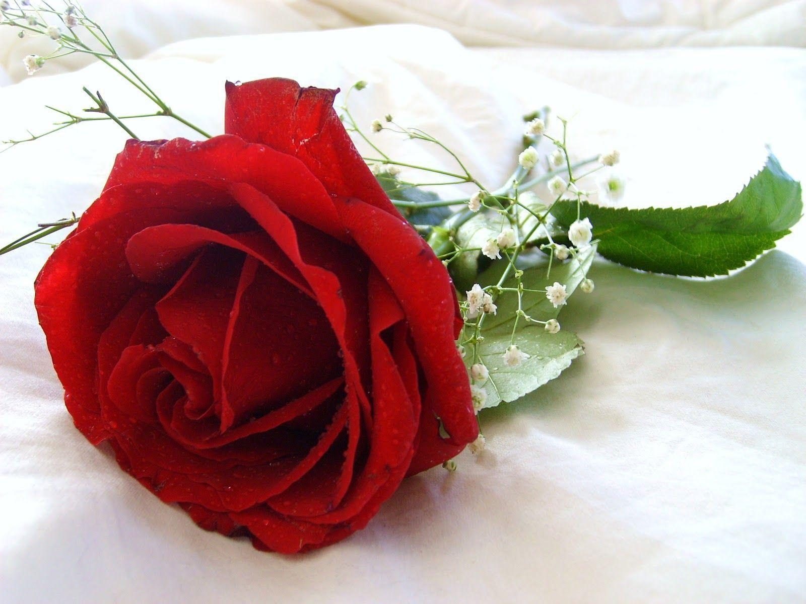 Red rose flowers wallpapers wallpaper cave red rose flower wallpaper beautiful flowers 2380 full hd wallpaper izmirmasajfo