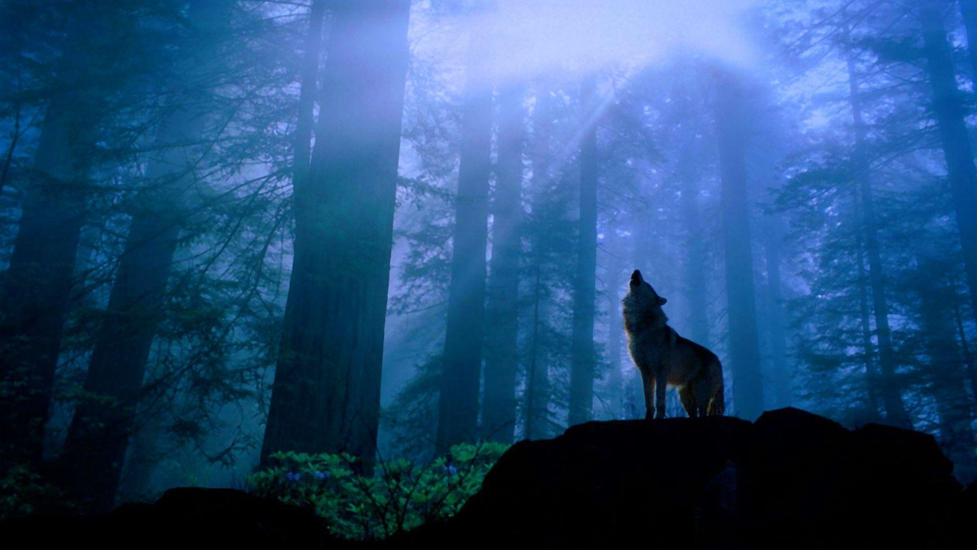 1920x1080 Howling wolf in forest Wallpaper