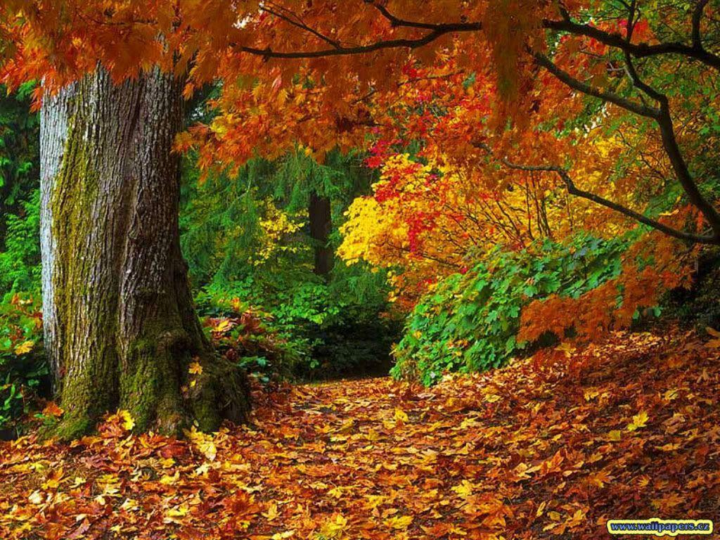 Desktop Wallpapers Fall - Wallpaper Cave