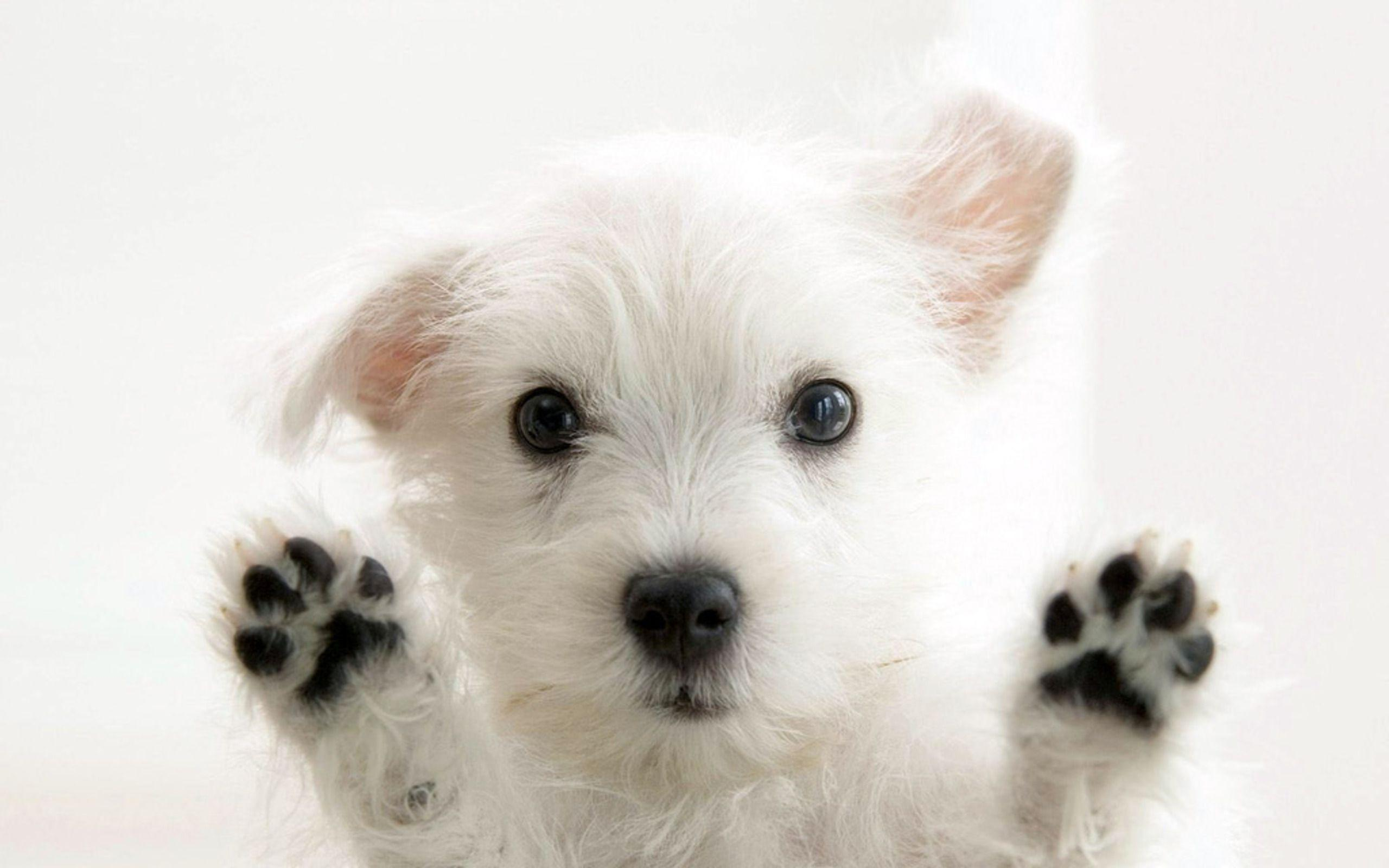 Funny White Cute Puppies, Animals Wallpaper, hd phone wallpapers ...