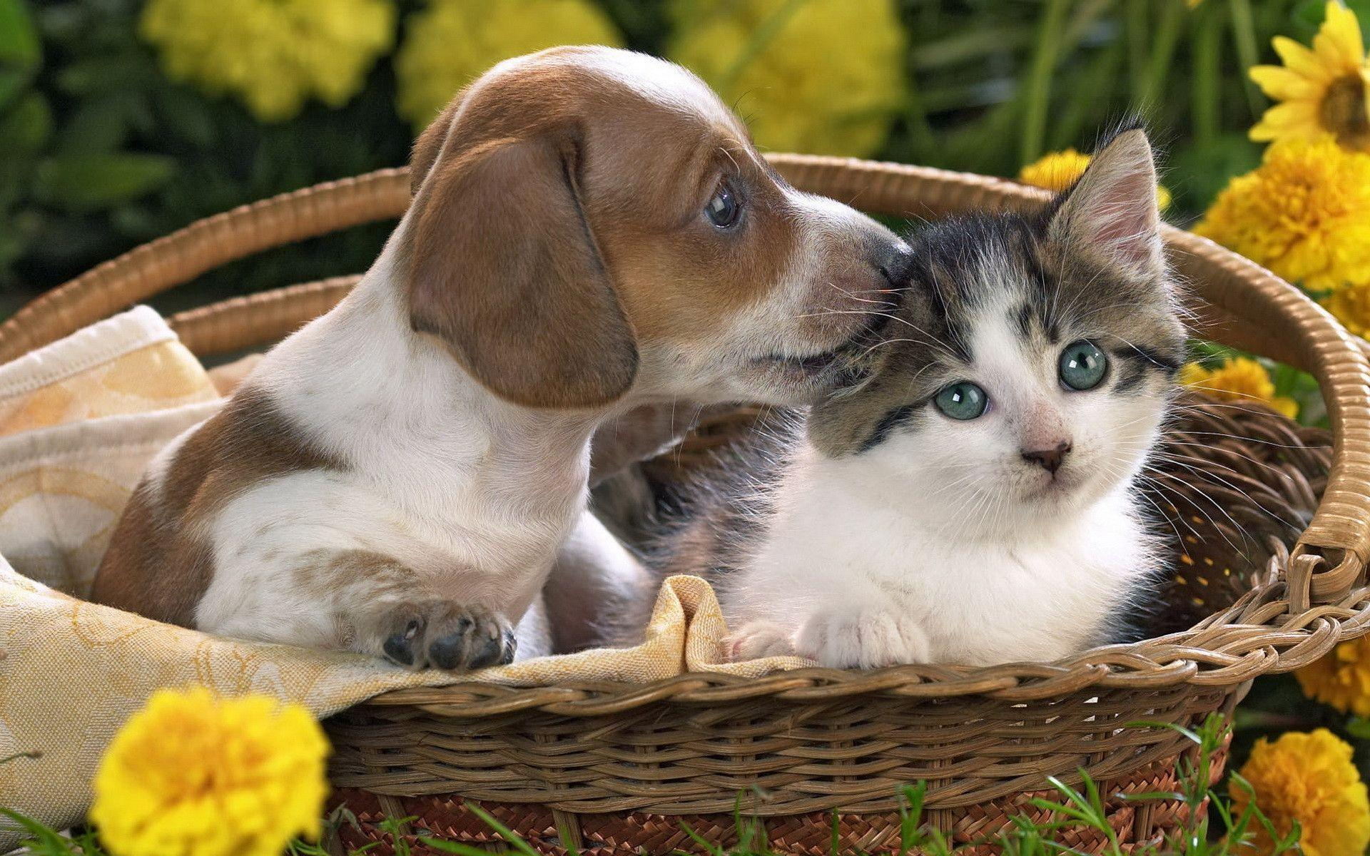 Puppy and kitten wallpapers and image