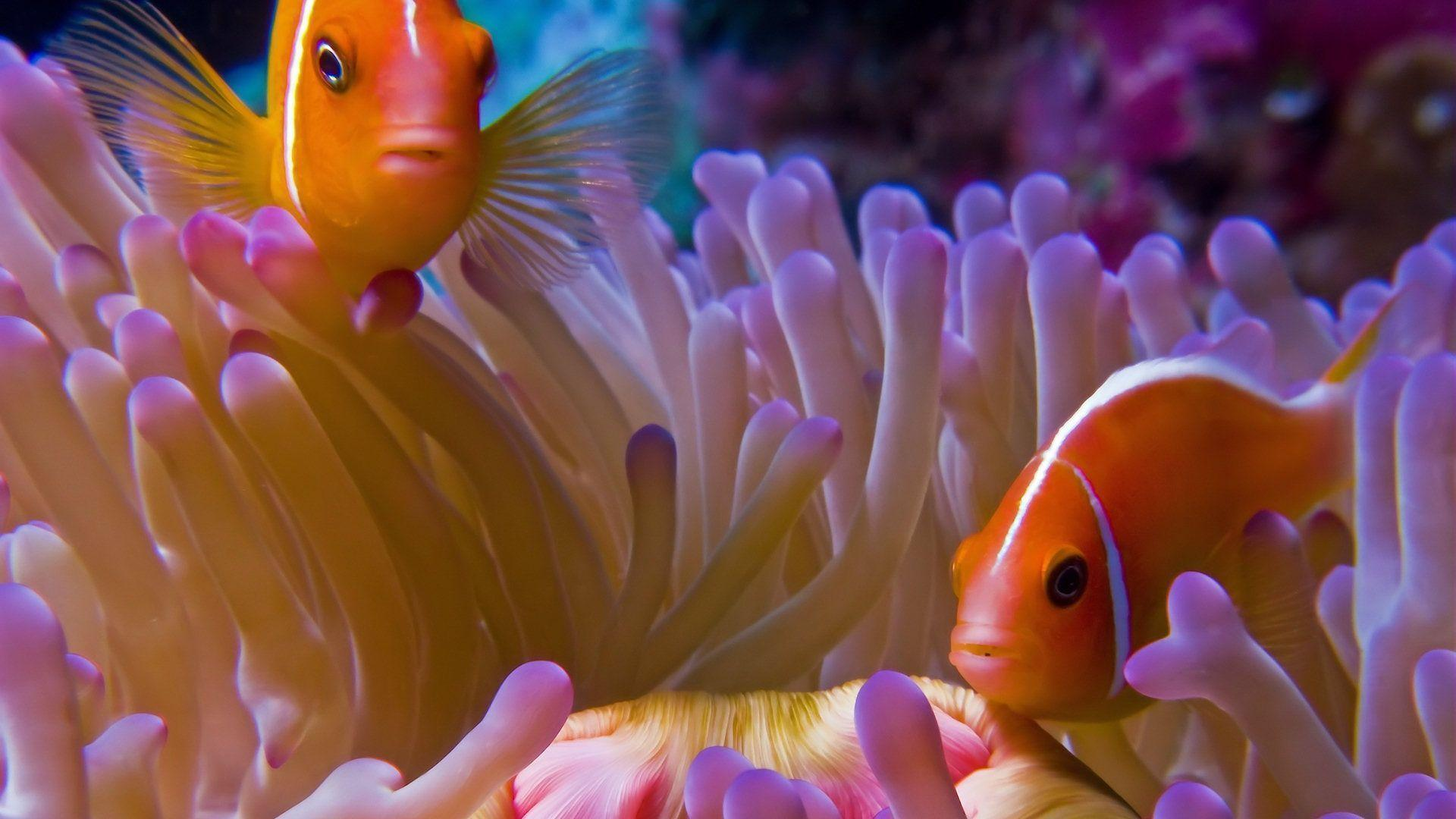 Fish Backgrounds Wallpaper Cave
