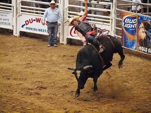 professional bull riders wallpapers wallpaper cave