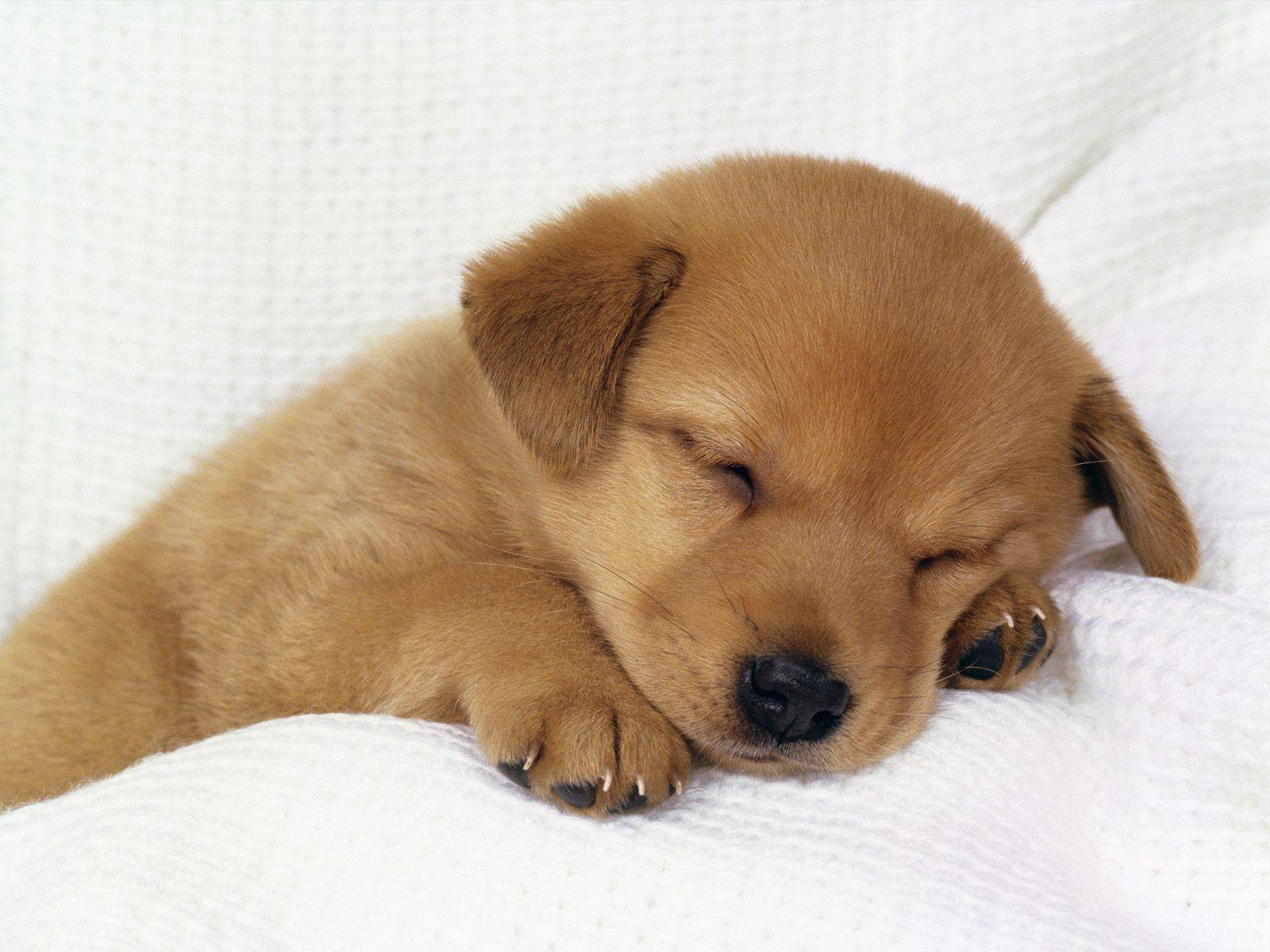 Cute and Adorable Puppy Pictures