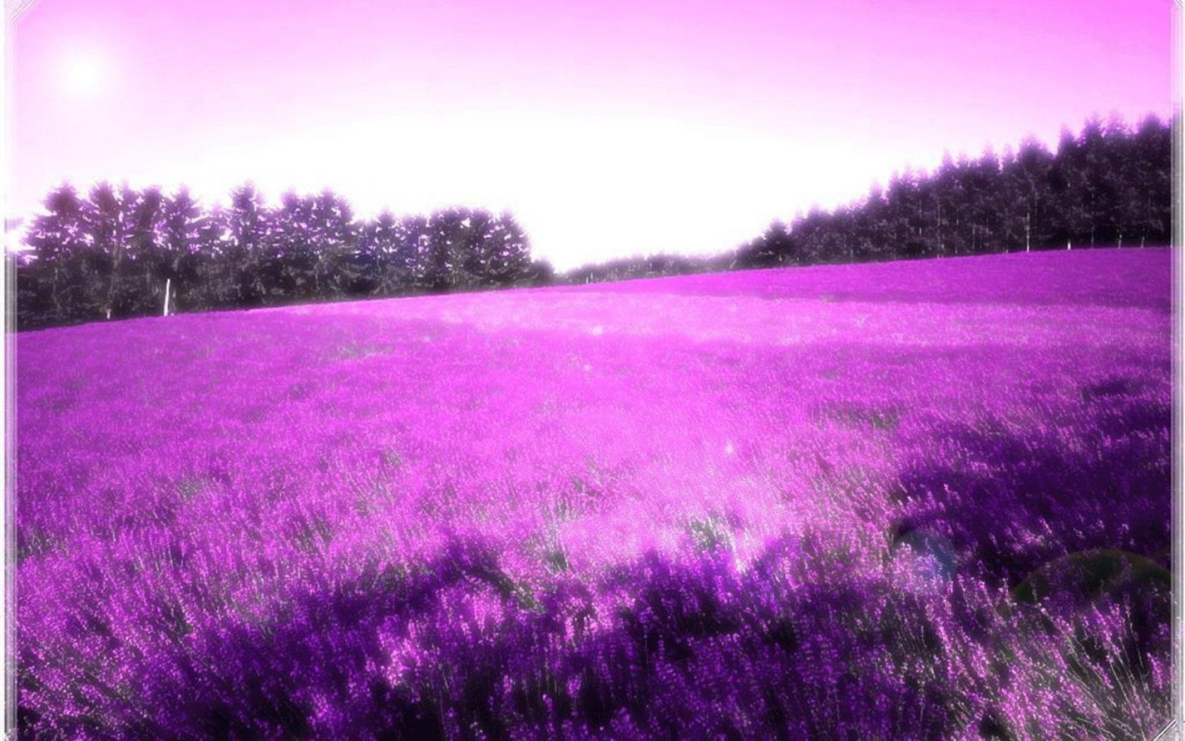 lavender color wallpaper hd - photo #4