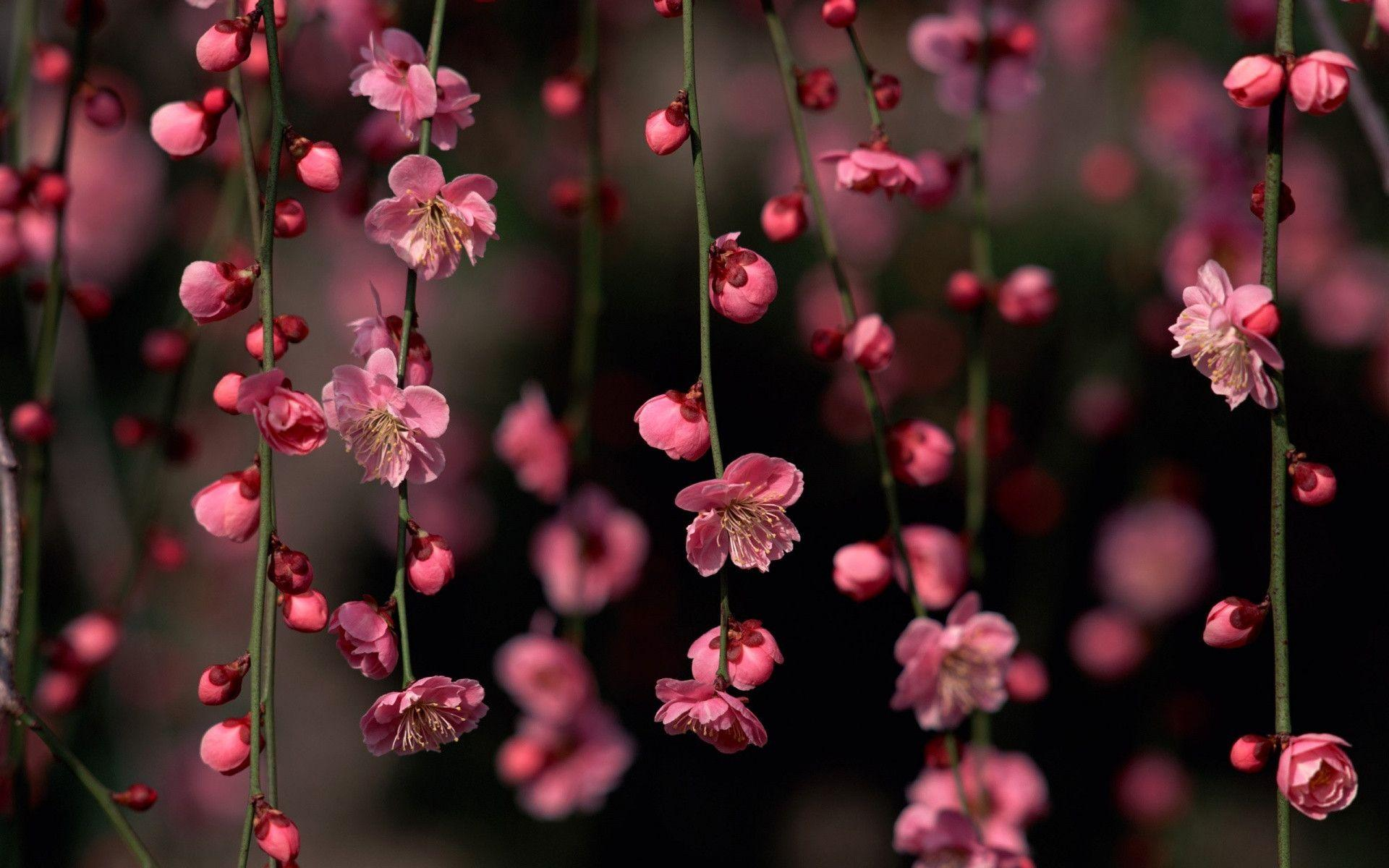 1920x1200 pink spring flowers desktop pc and mac wallpaper