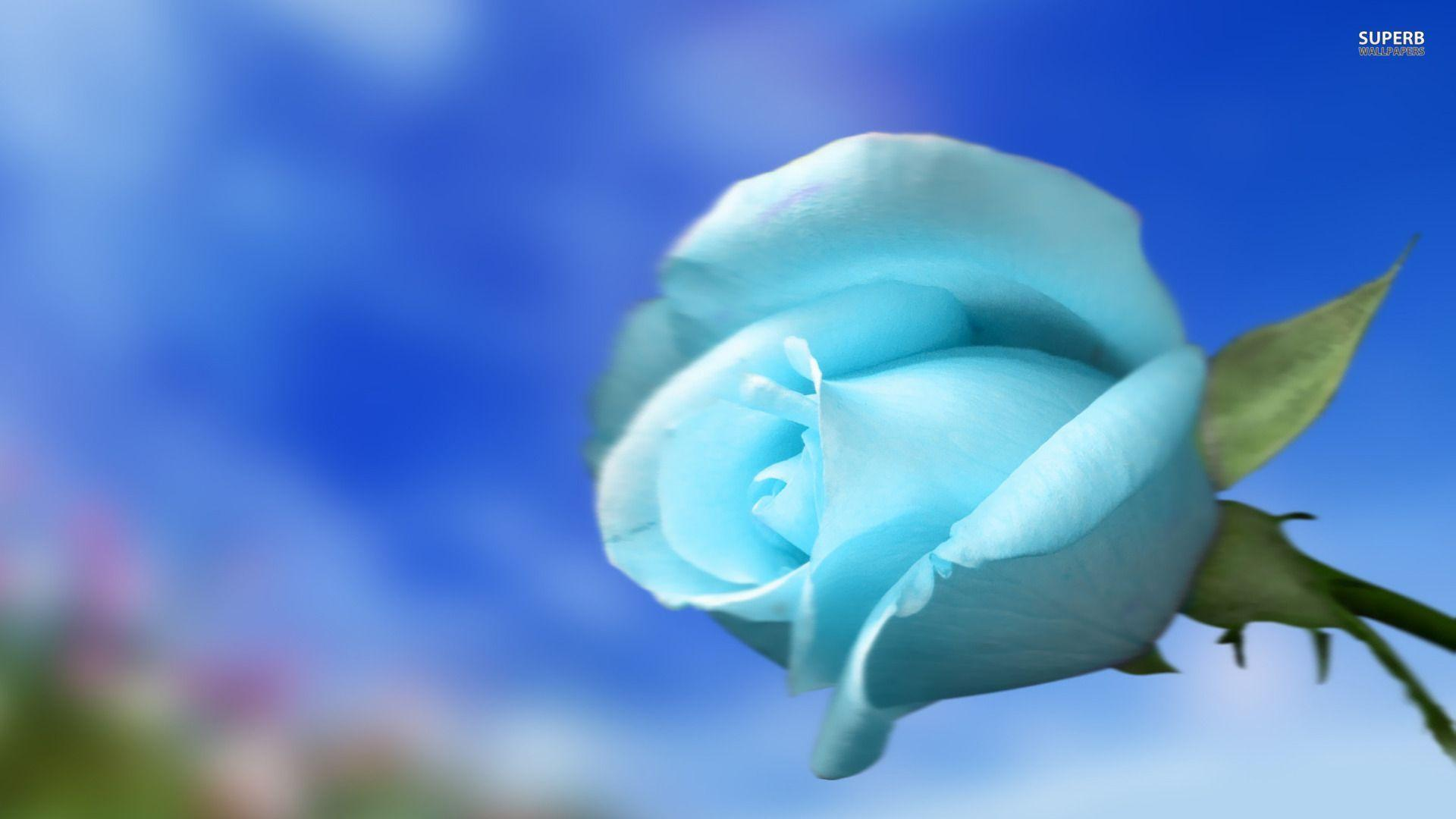 flower vase sign with Sky Blue Wallpaper on Name 3Dpink Rose 7D likewise Fortnite Account All Season 2 Skins Mako Glider 46083864 additionally Watch as well Watch likewise Gerbera Daisies.