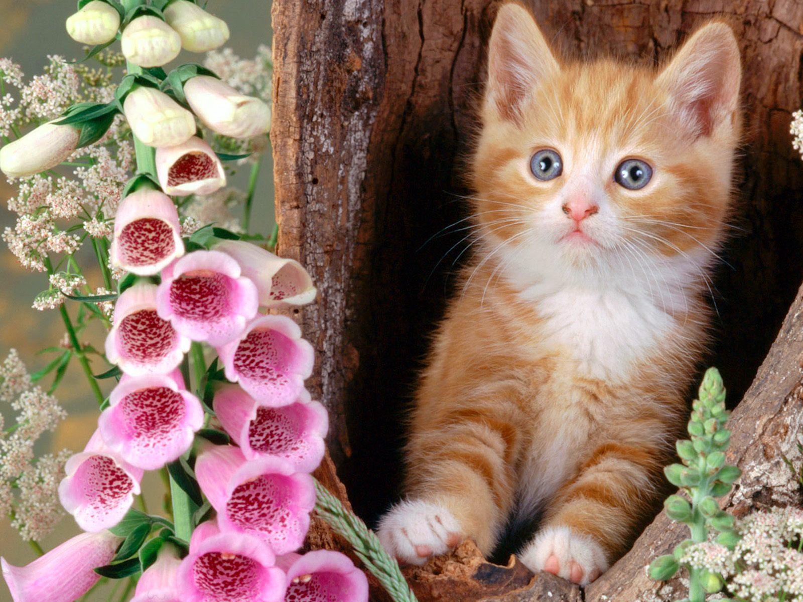 Cat Desktop Backgrounds Wallpaper Cave