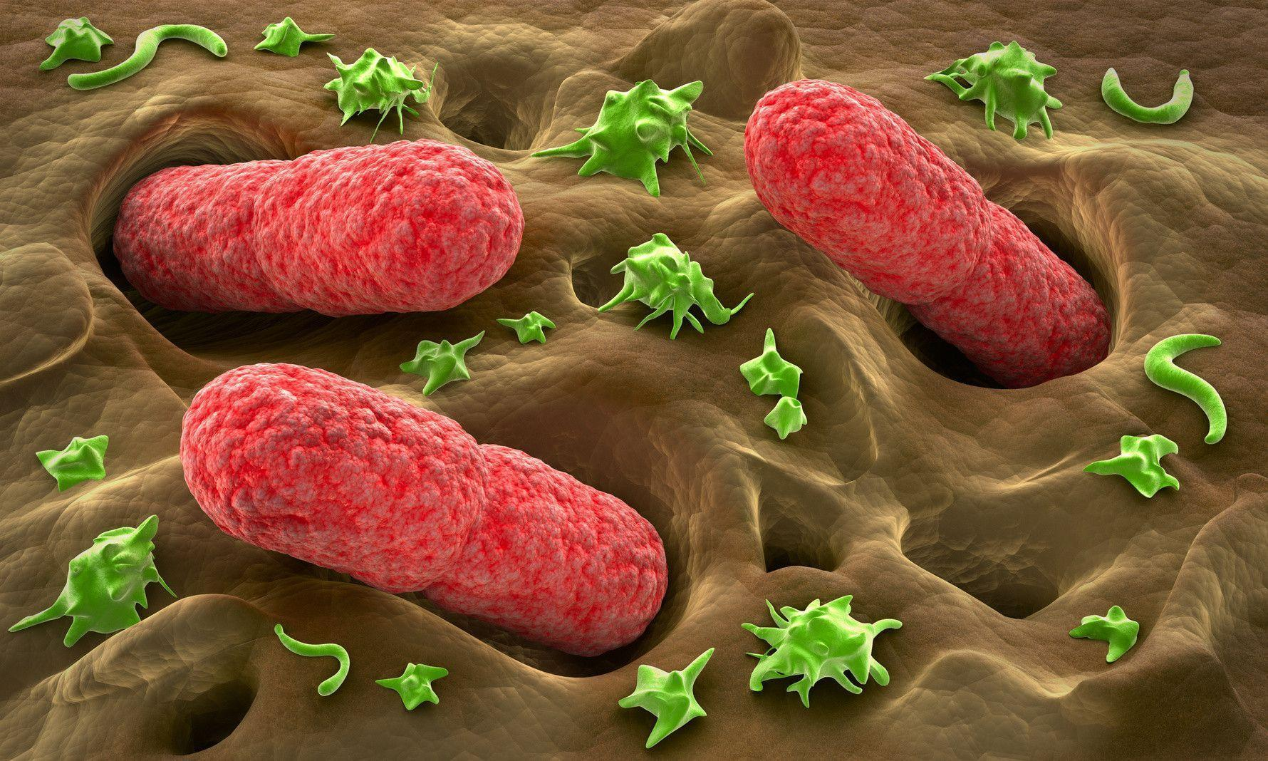 Staphylococcus Bacteria, wallpaper, Staphylococcus Bacteria hd