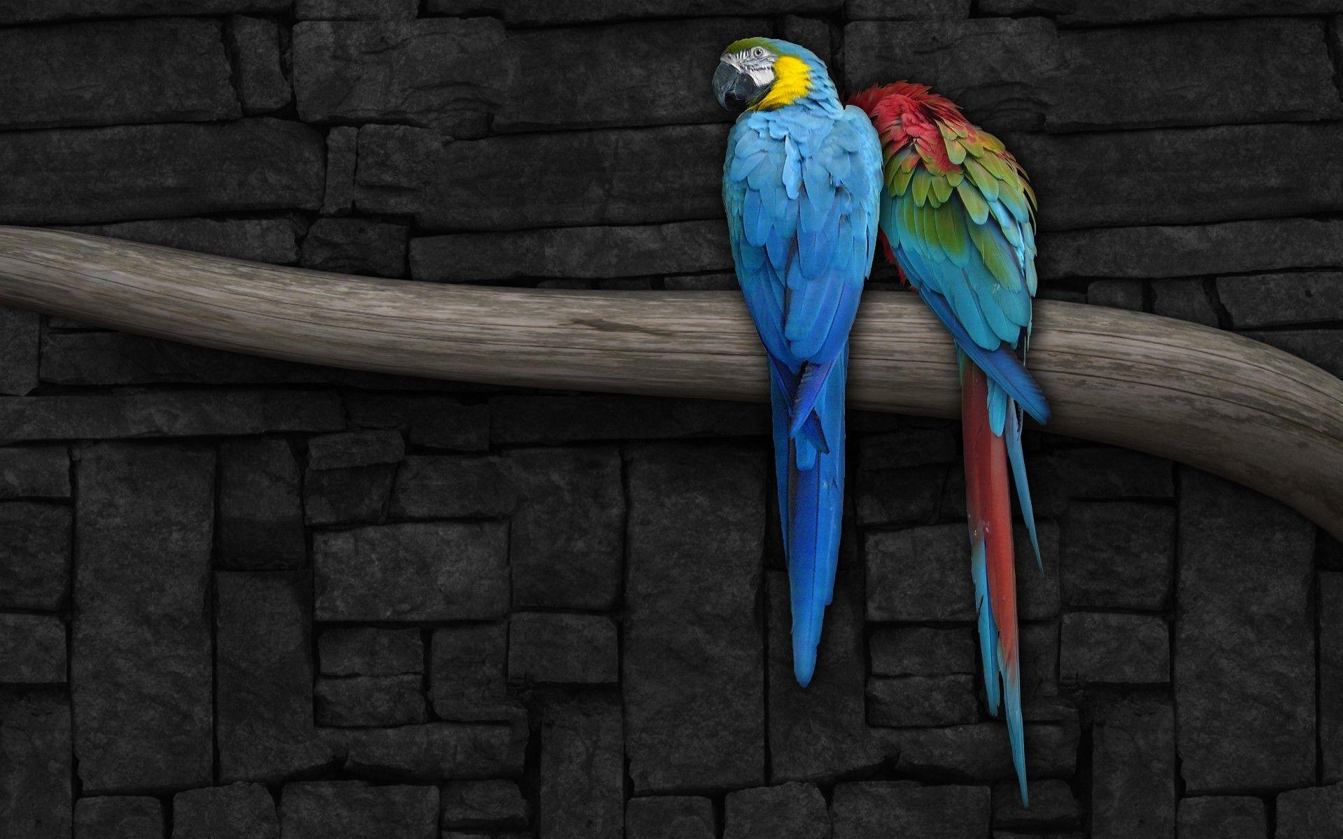 Macaw Wallpapers - Full HD wallpaper search